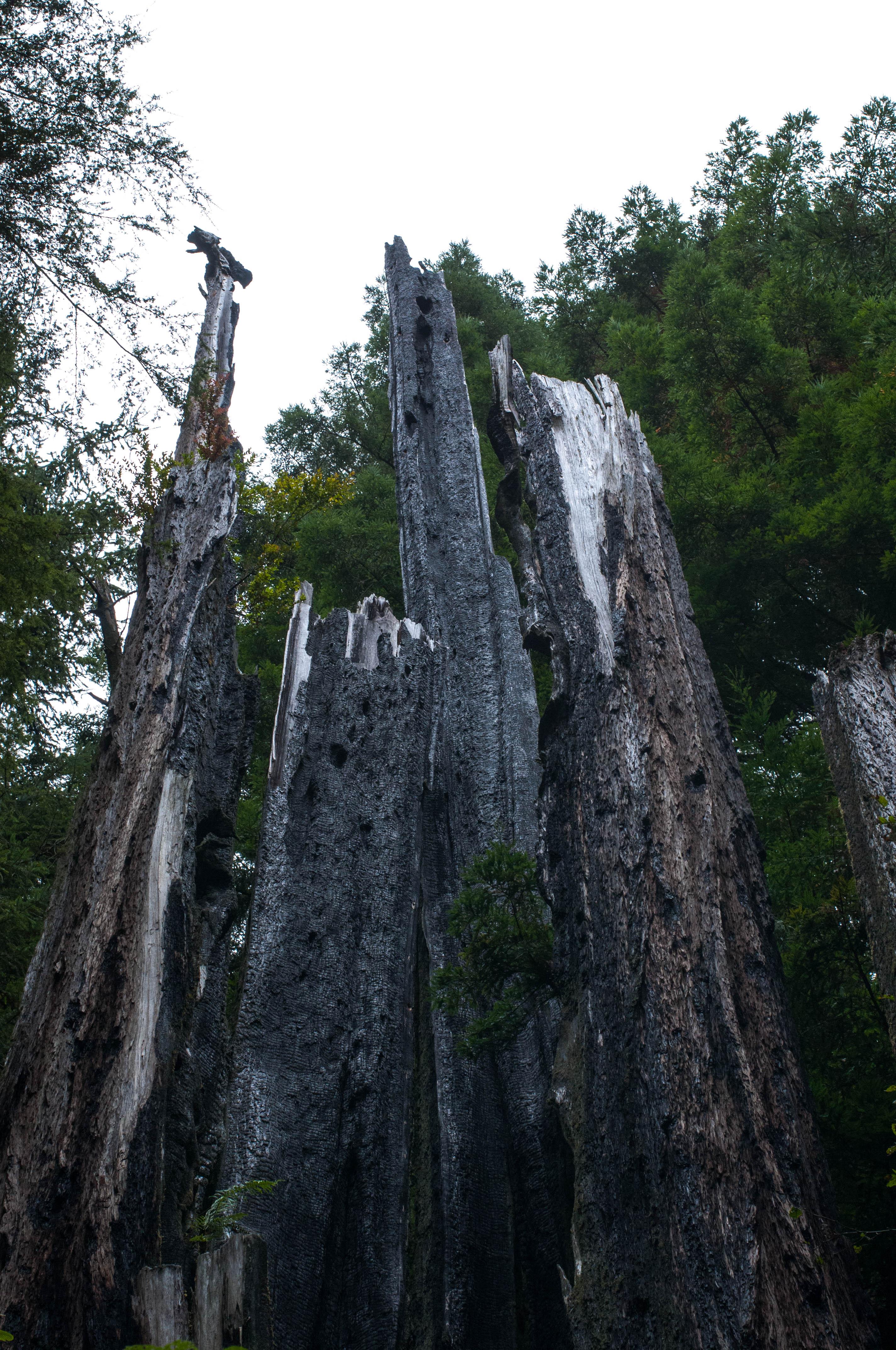 ZAJ_2213Trees of Mystery