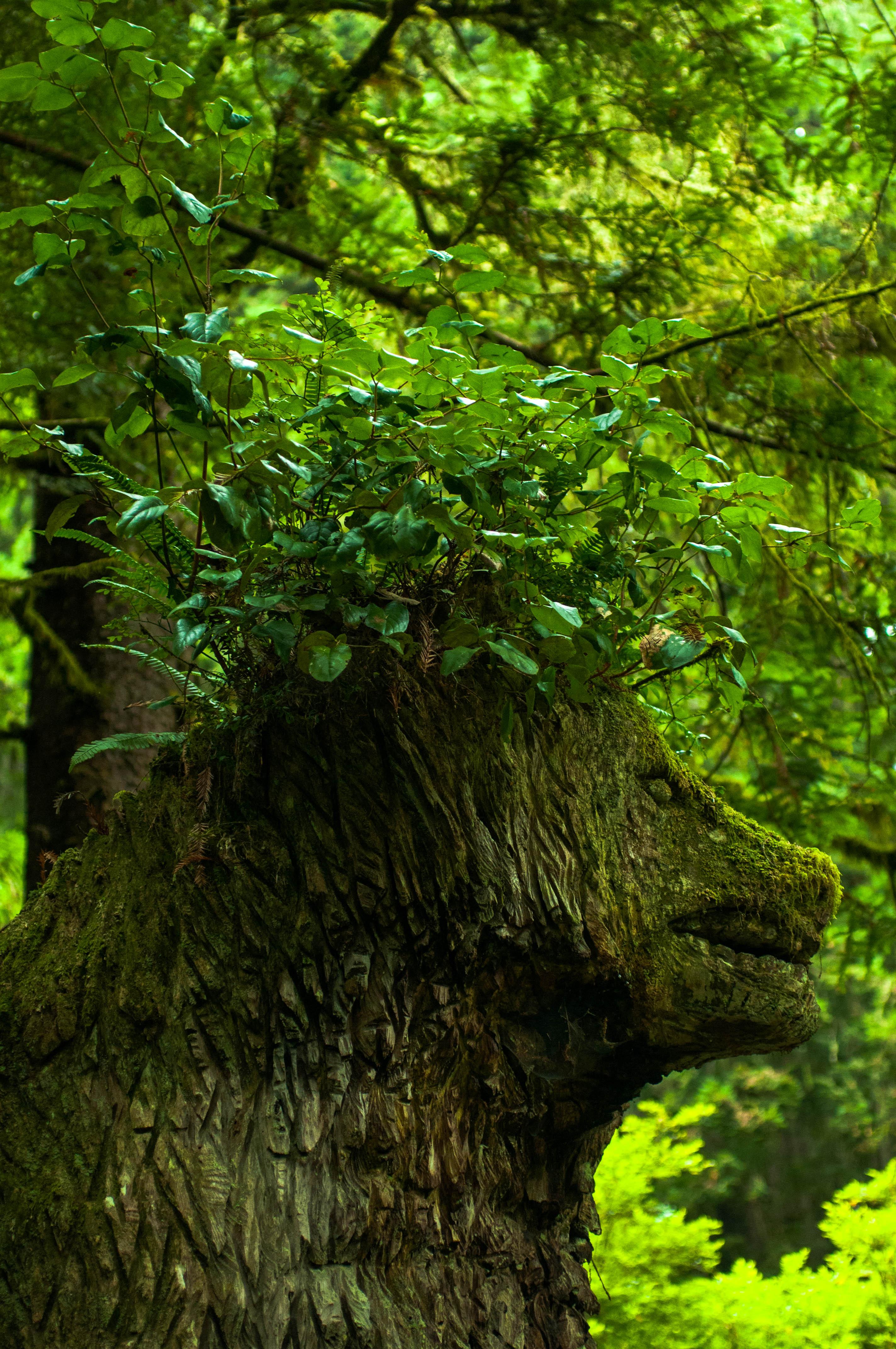 ZAJ_2231Trees of Mystery