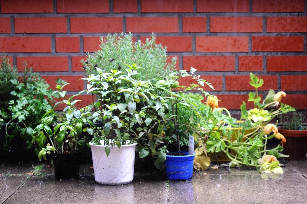 Kräutergarten im Starkregen