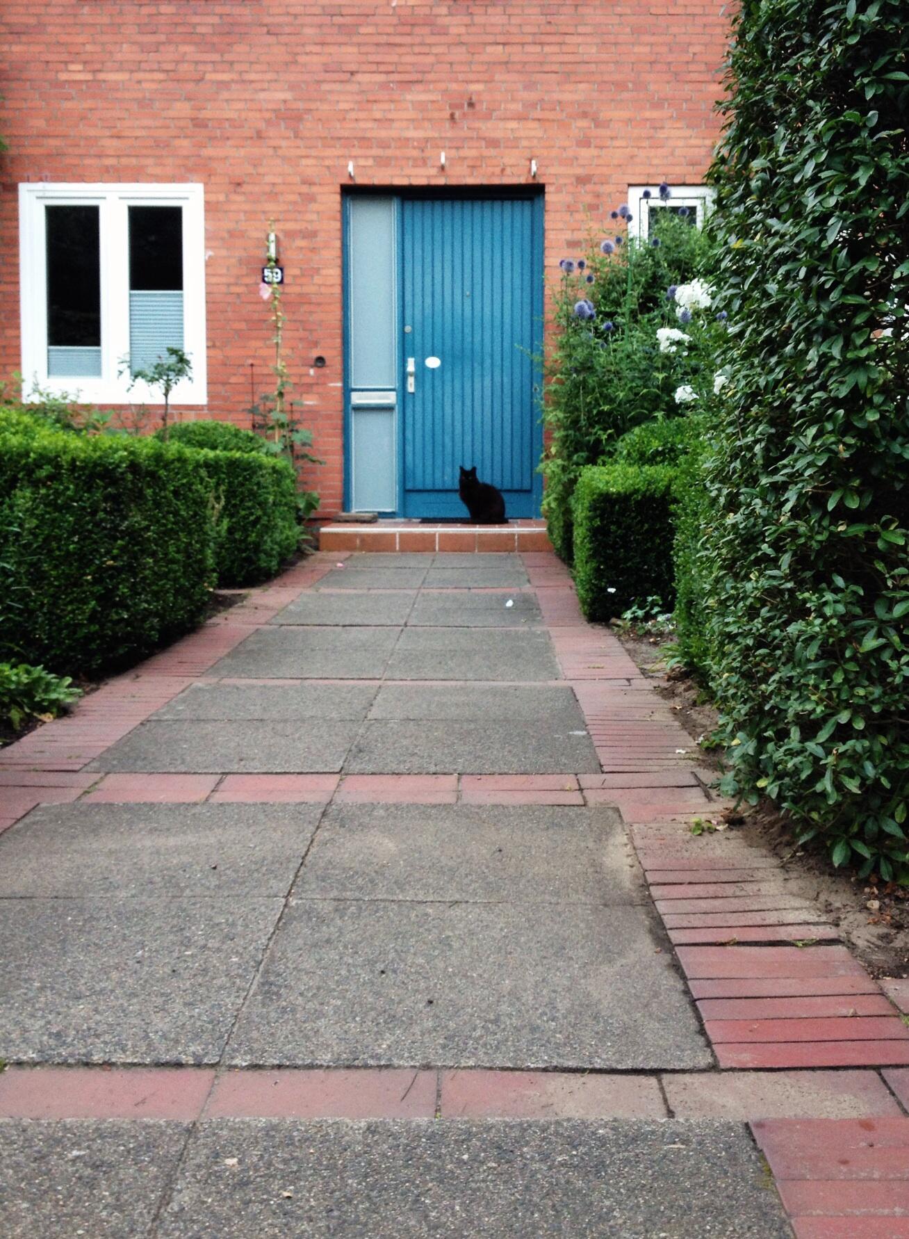 schwarze Katze vor blauer Tür