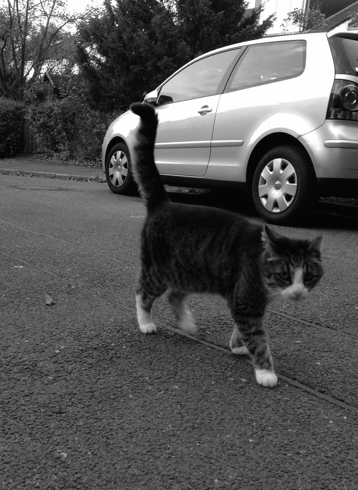 Katze Mister J