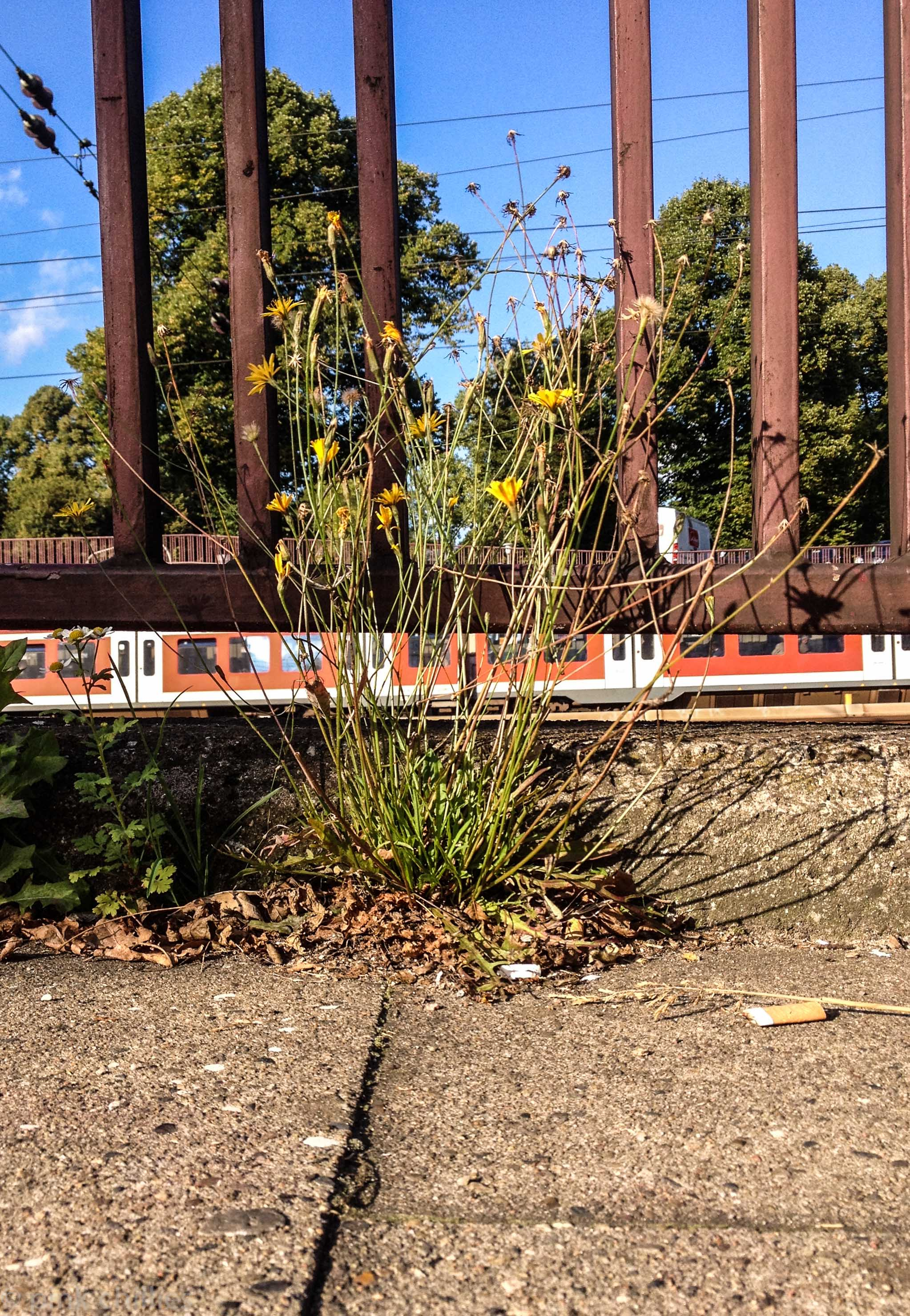 Gleise beim HBF Hamburg