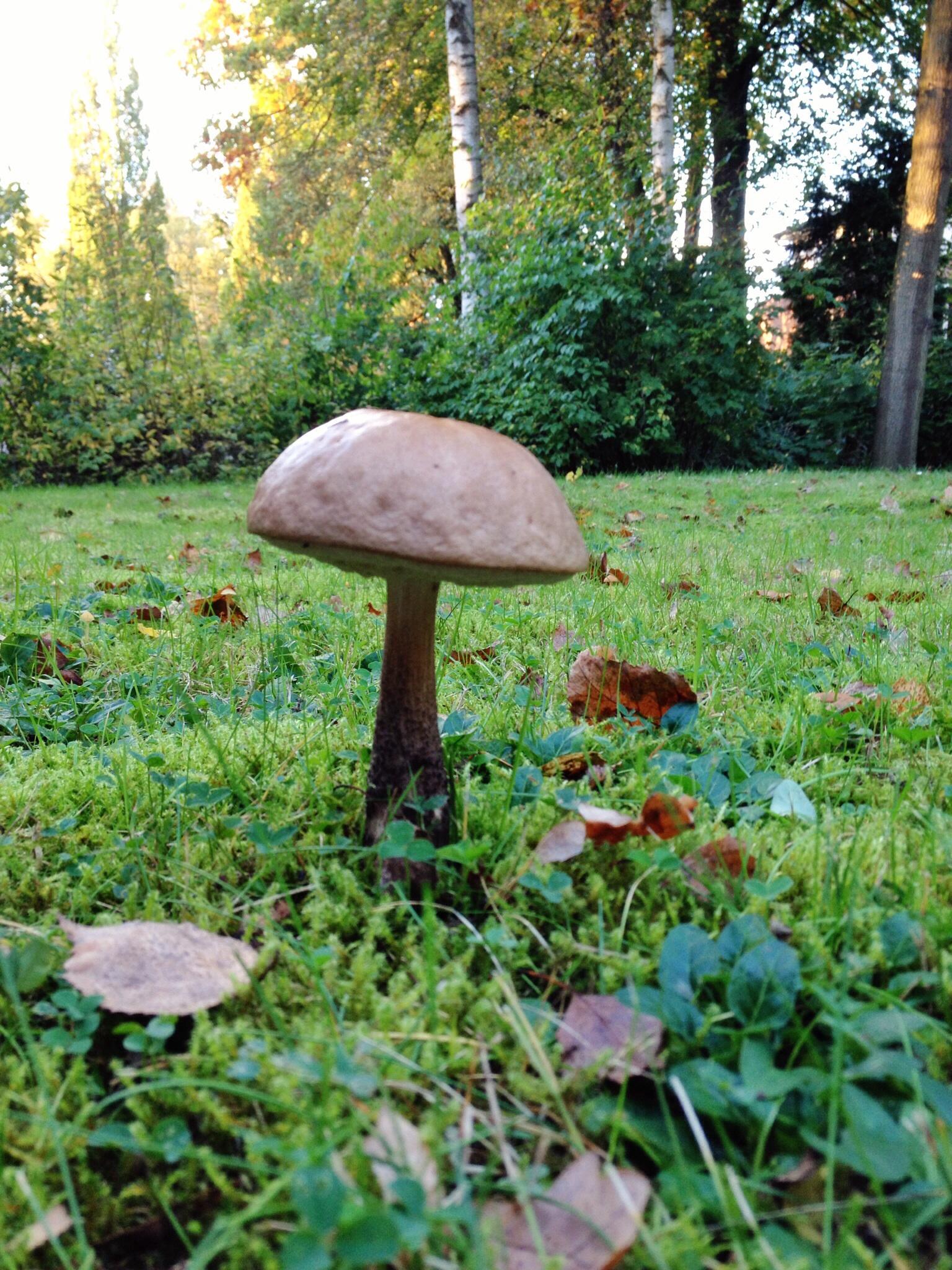 Pilz im Garten