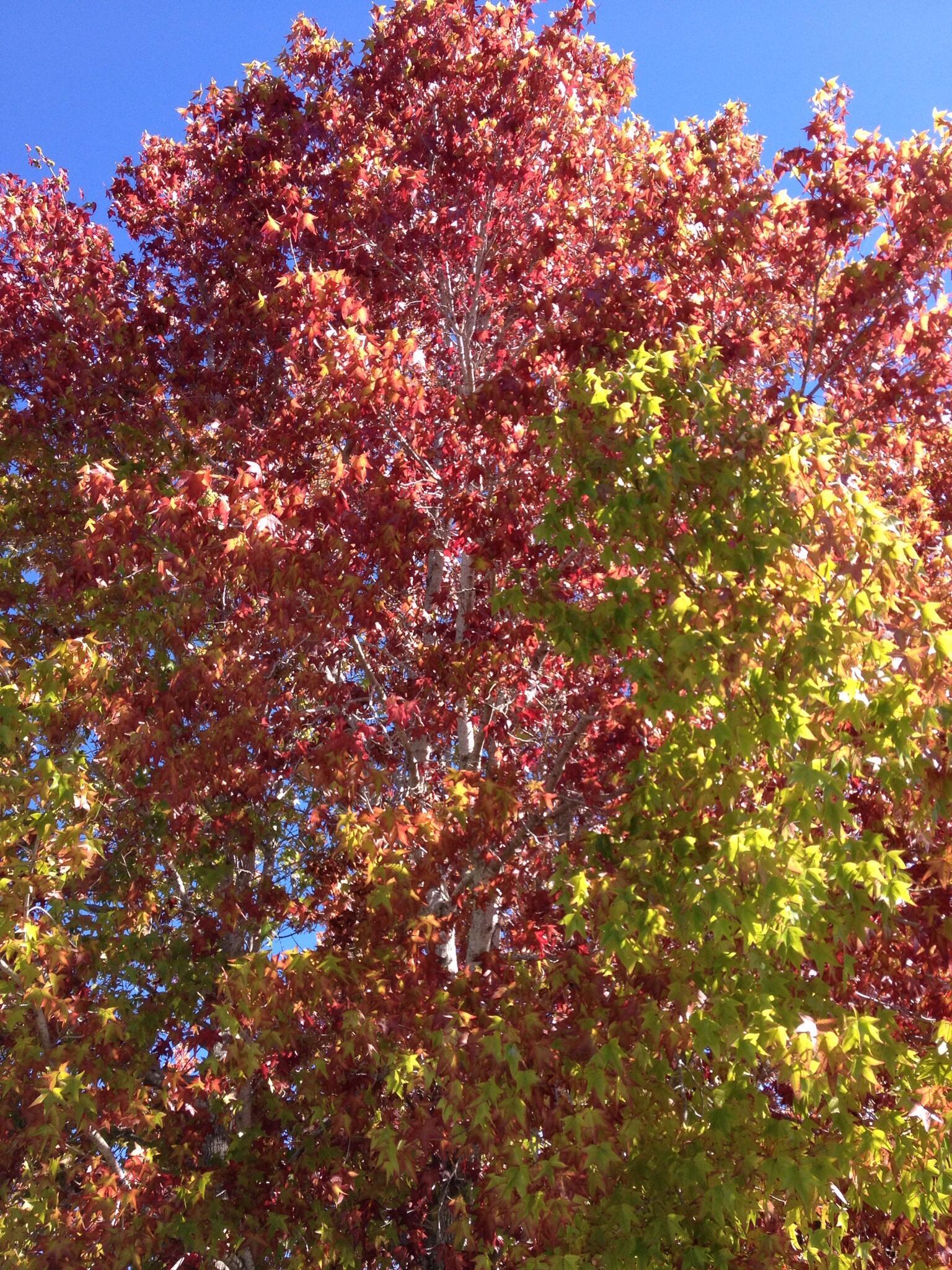 Herbststimmung in Kalifornien