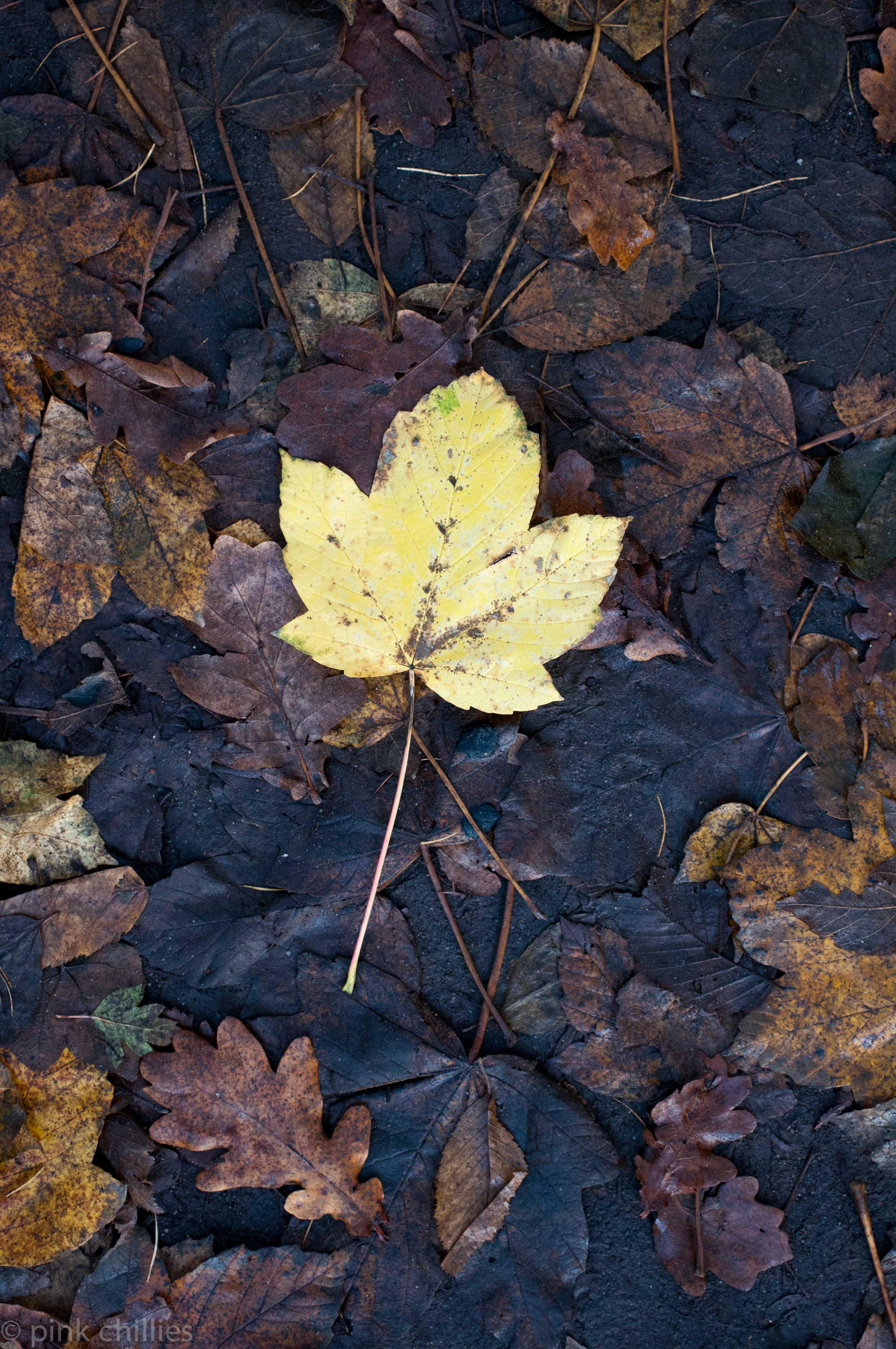 gelbes Blatt auf schmutzigen Laub