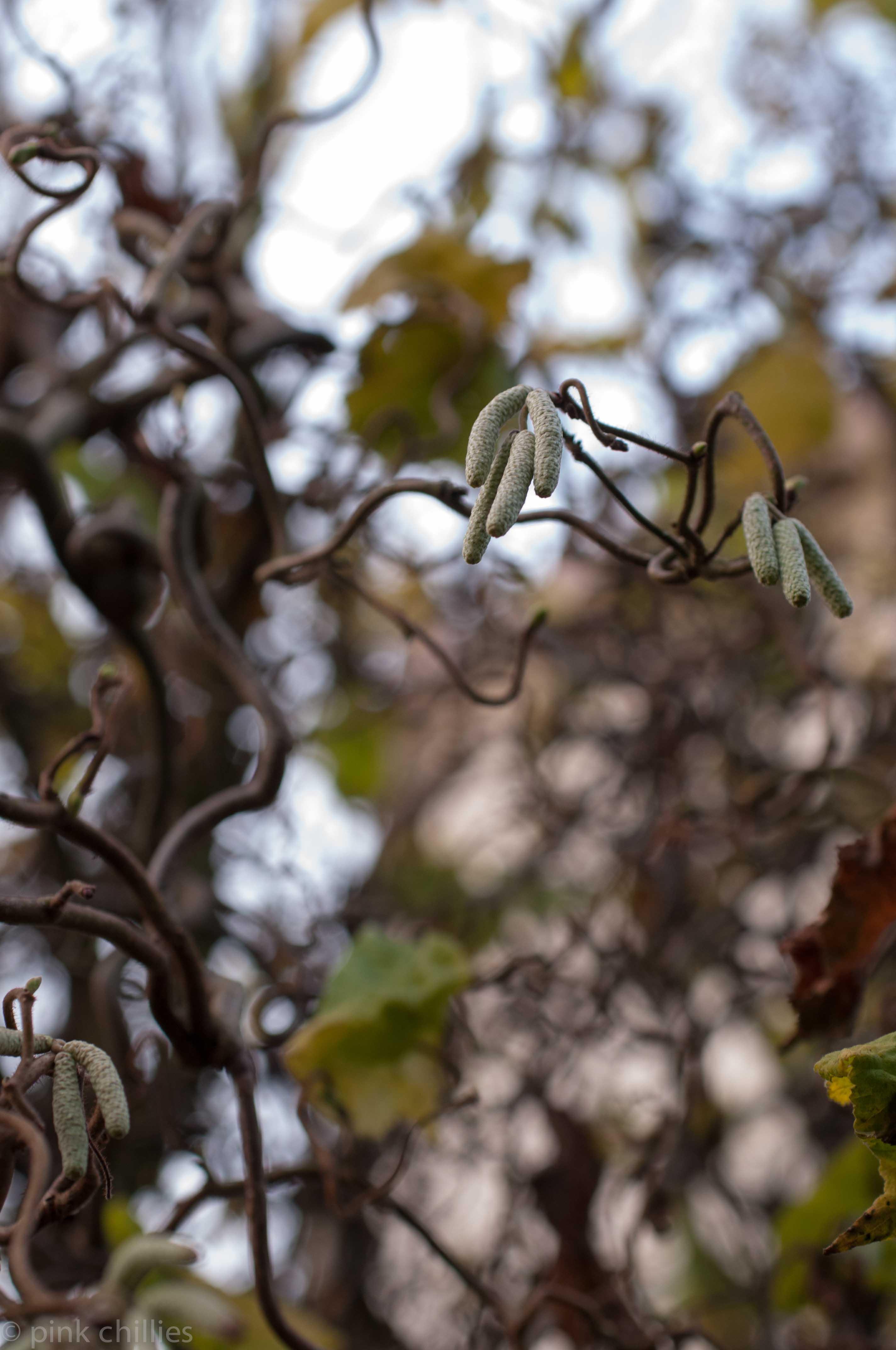geschnörkelter Baum