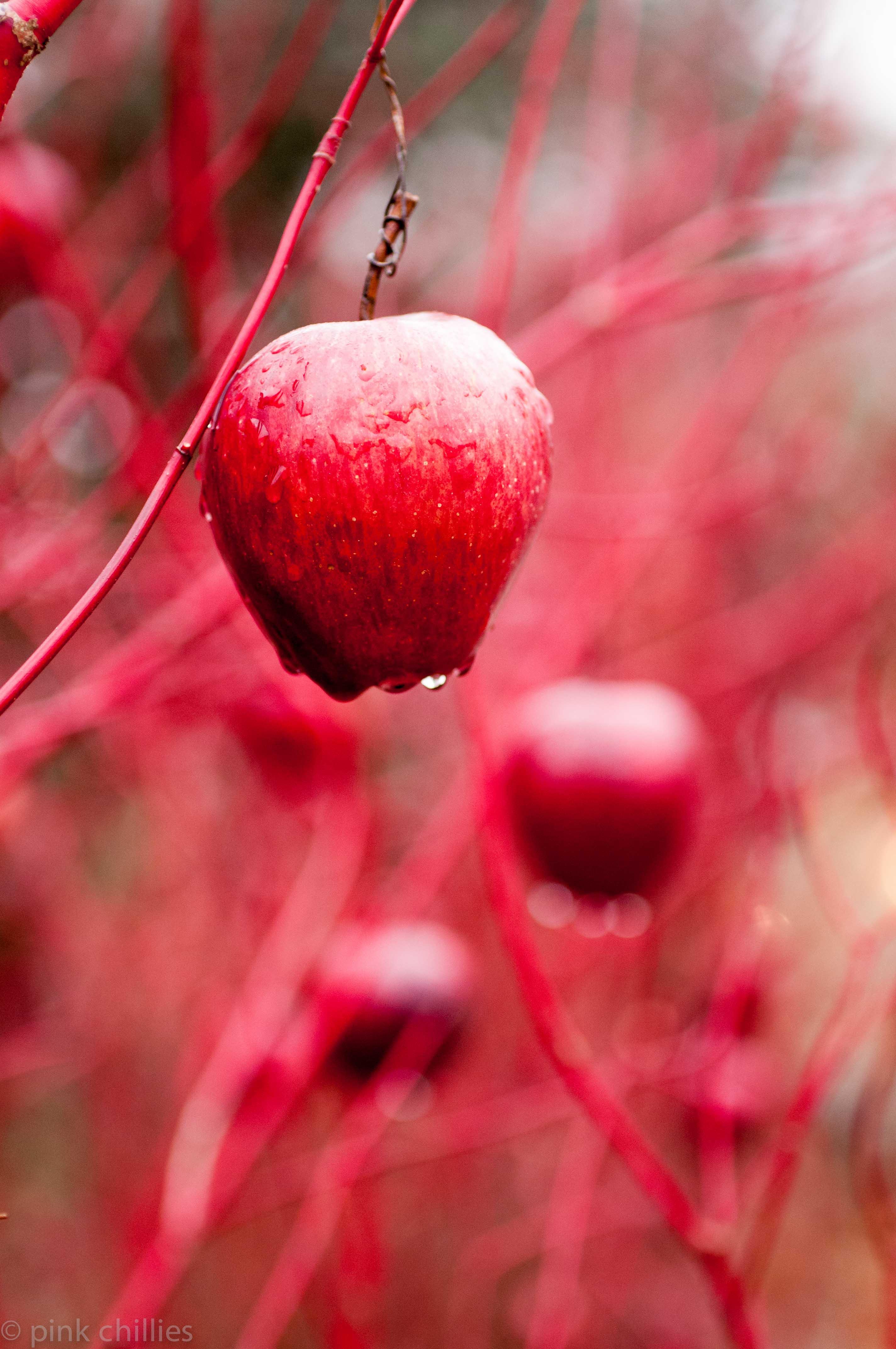 Weihanchtsapfel