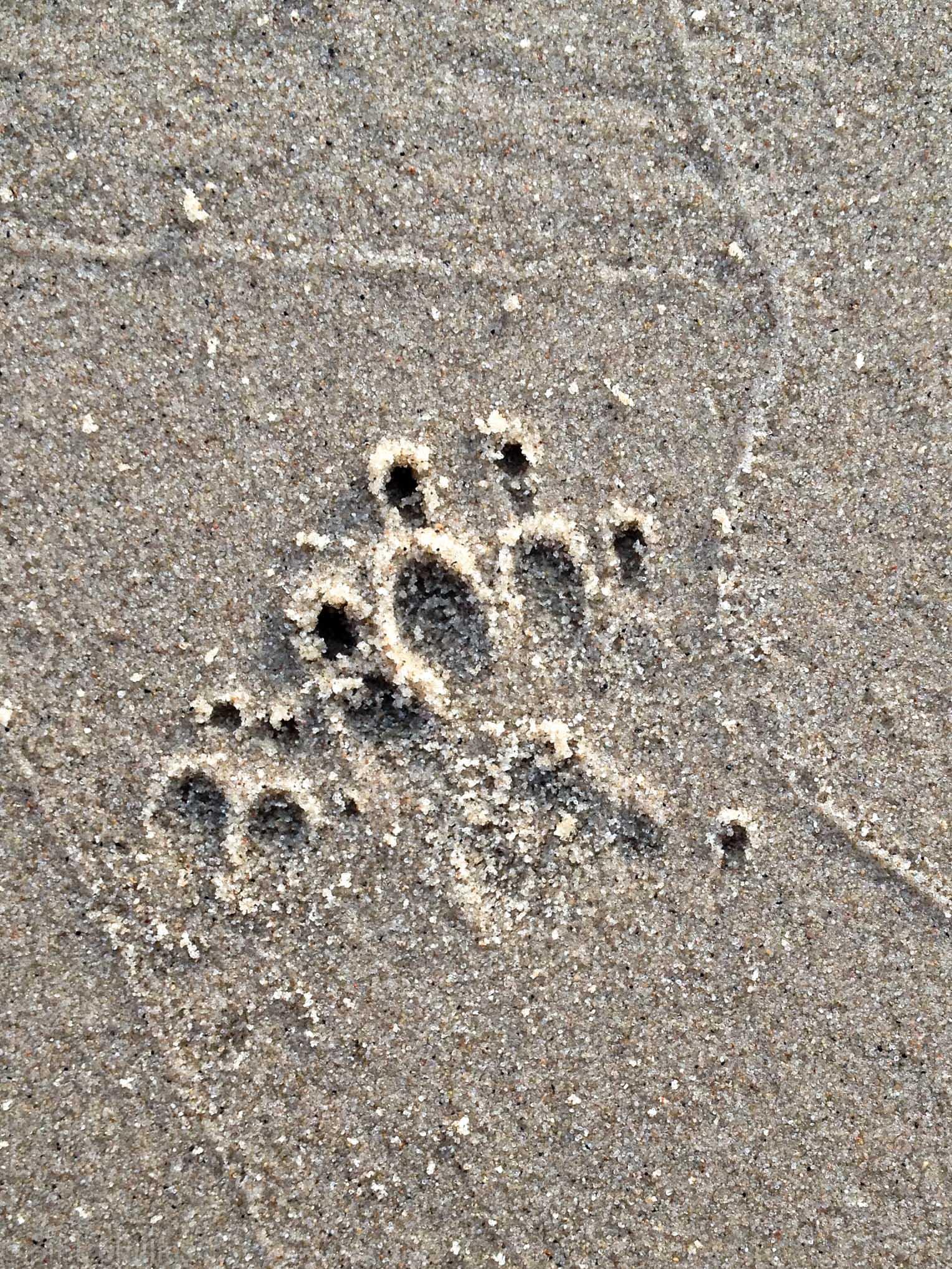 Hundepfote im Sand