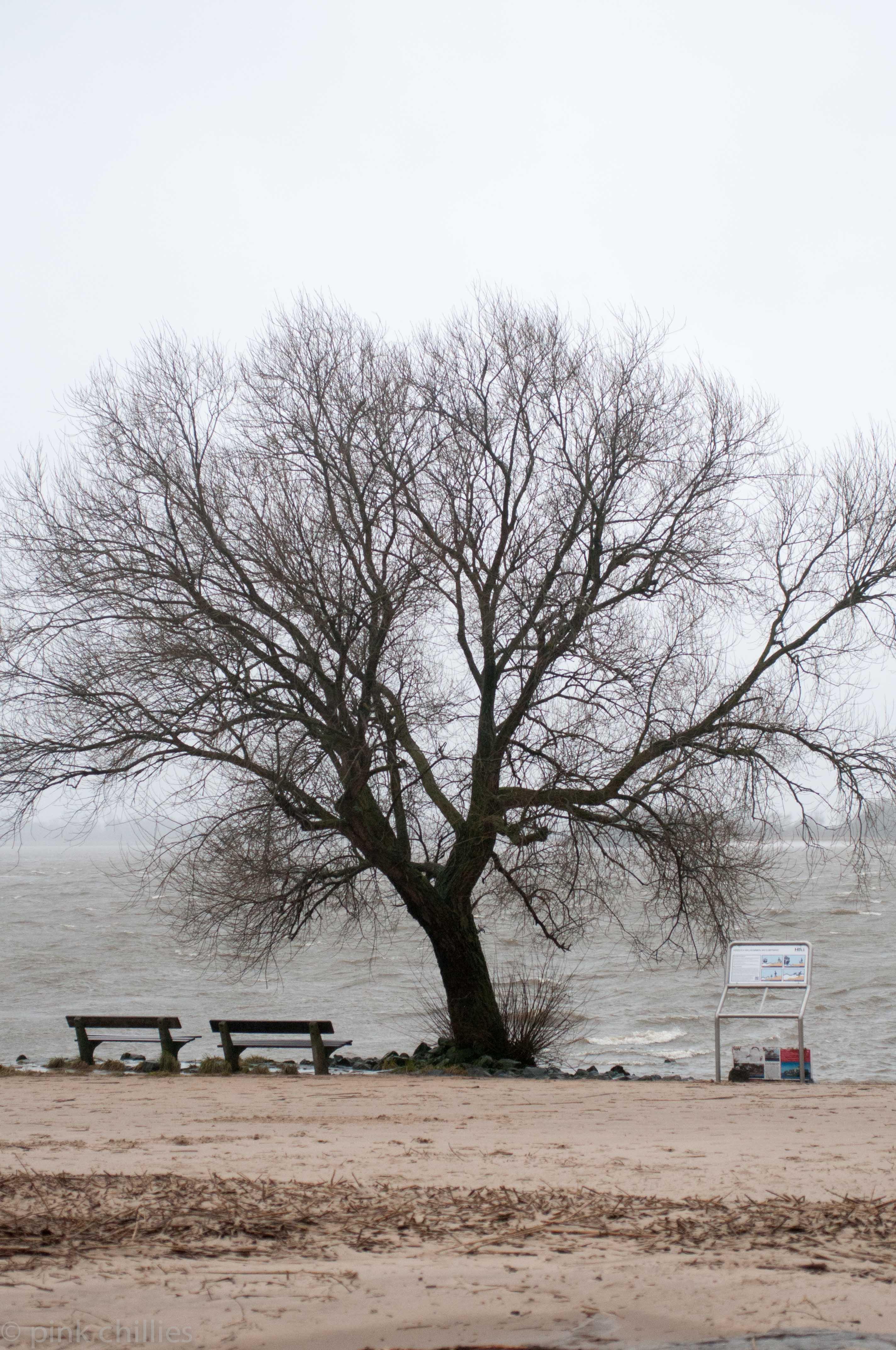 Baum mit Bänken am Strand