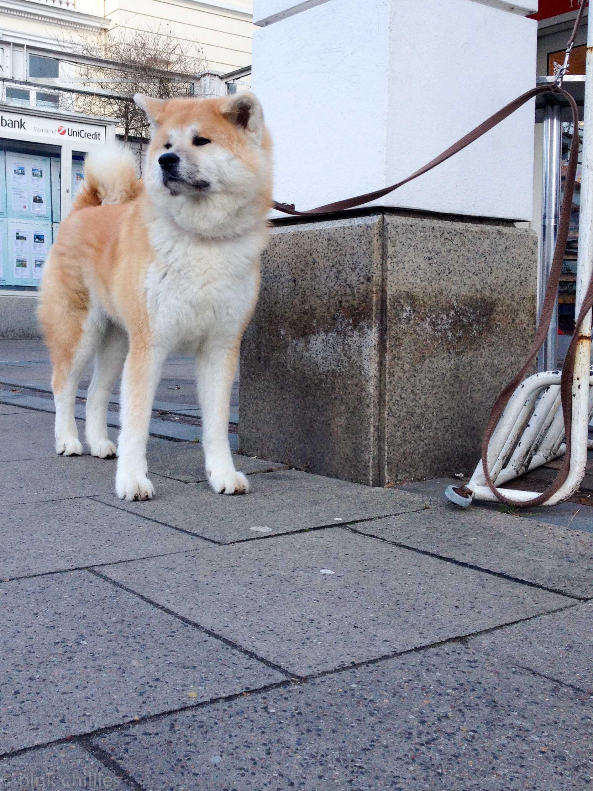wartender Hund