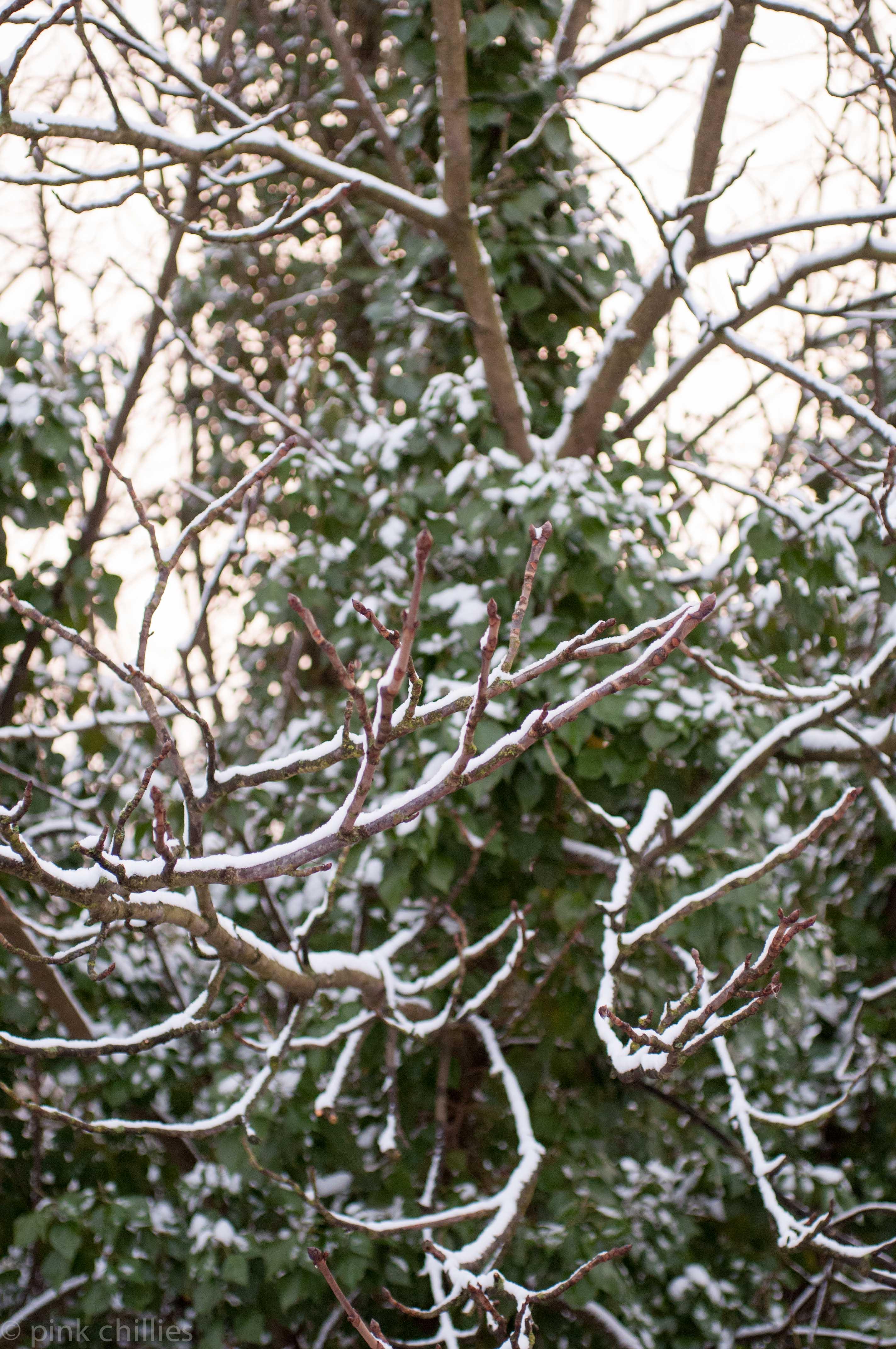 Schnee auf Baum
