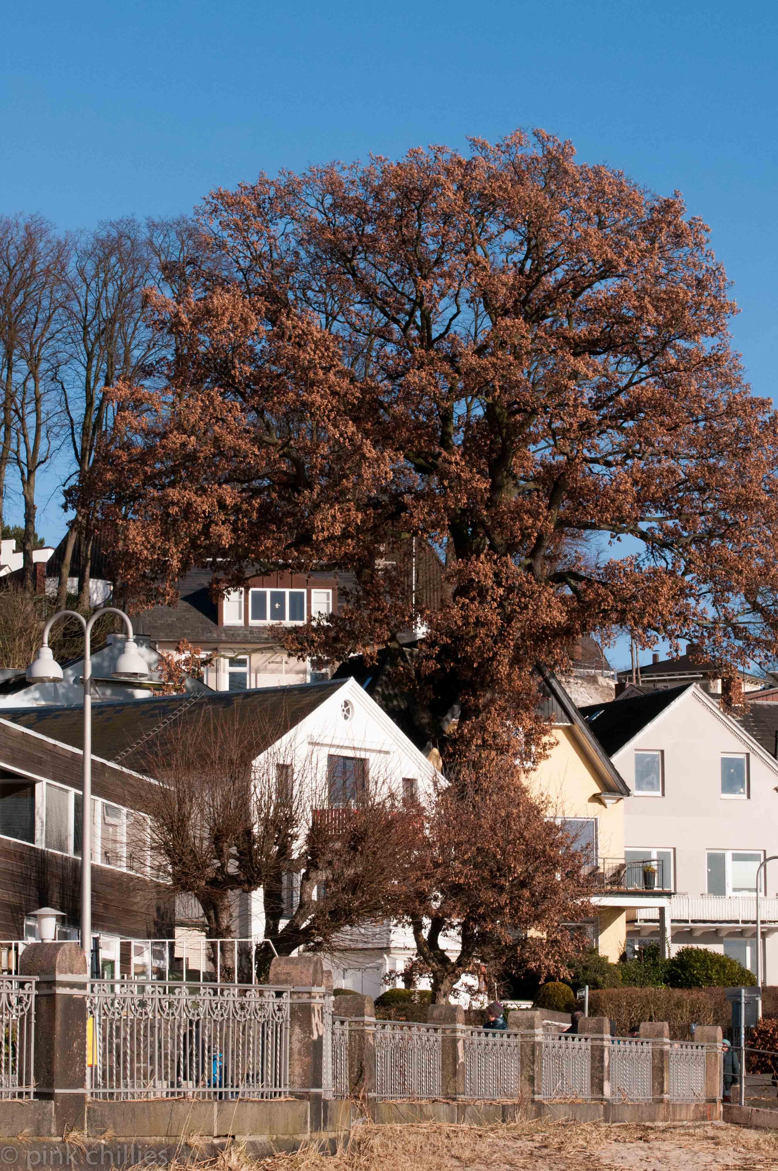 Baum mit vertrockneten Blättern