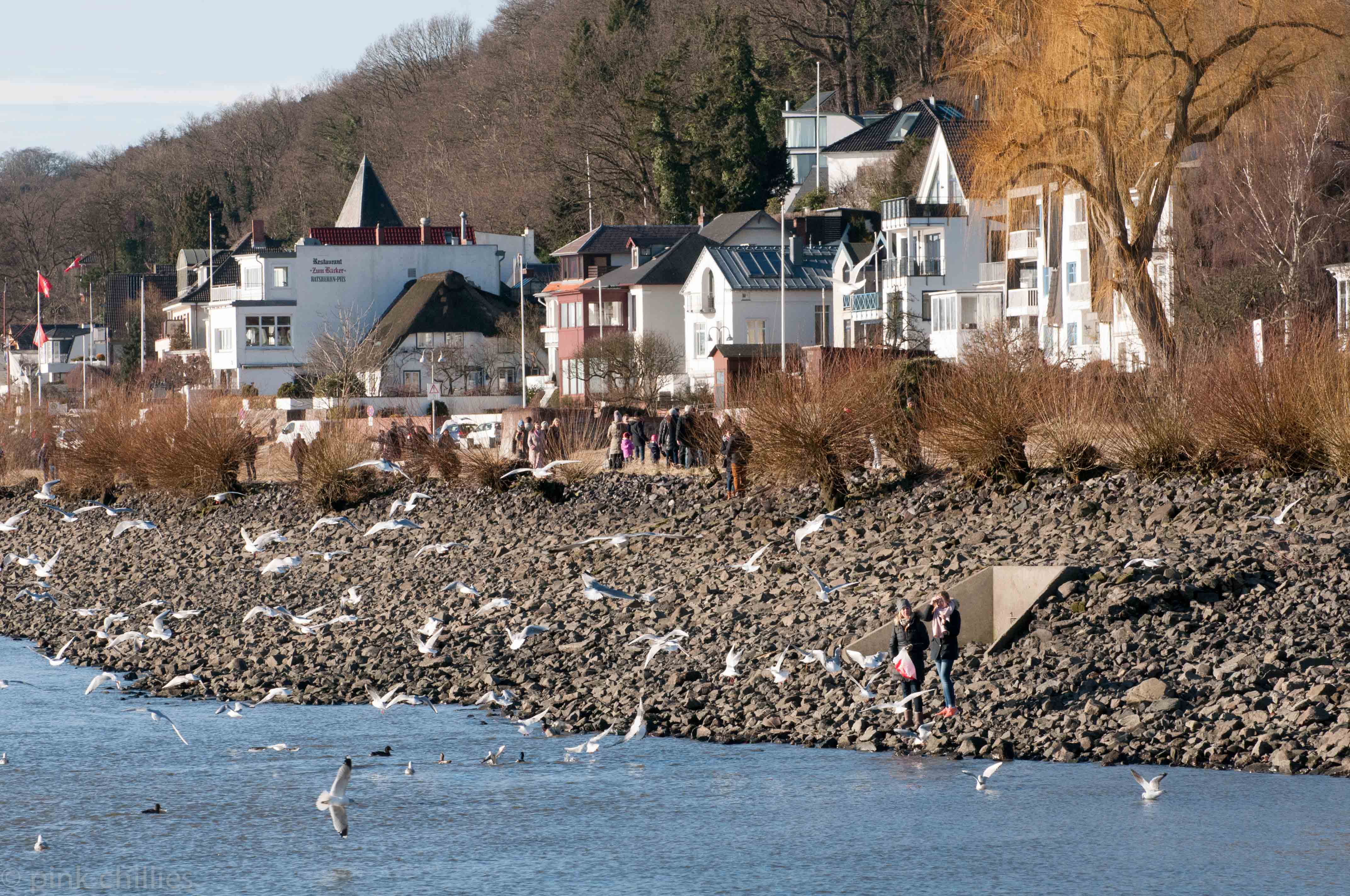 Möwen füttern an der Elbe