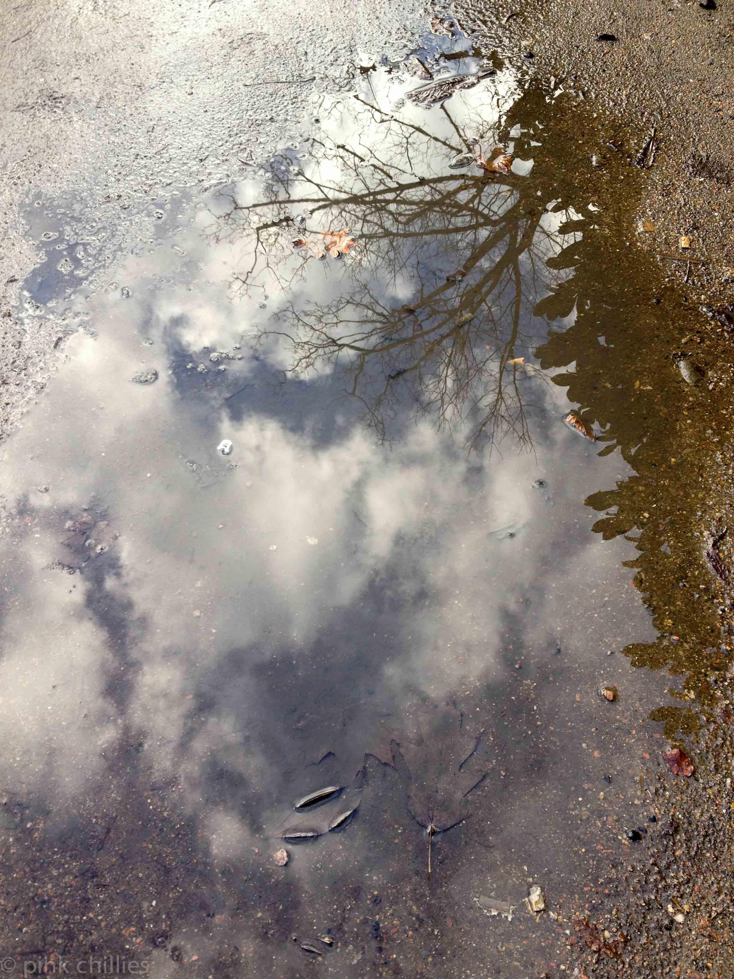 Wolken und Baum in der Pfütze