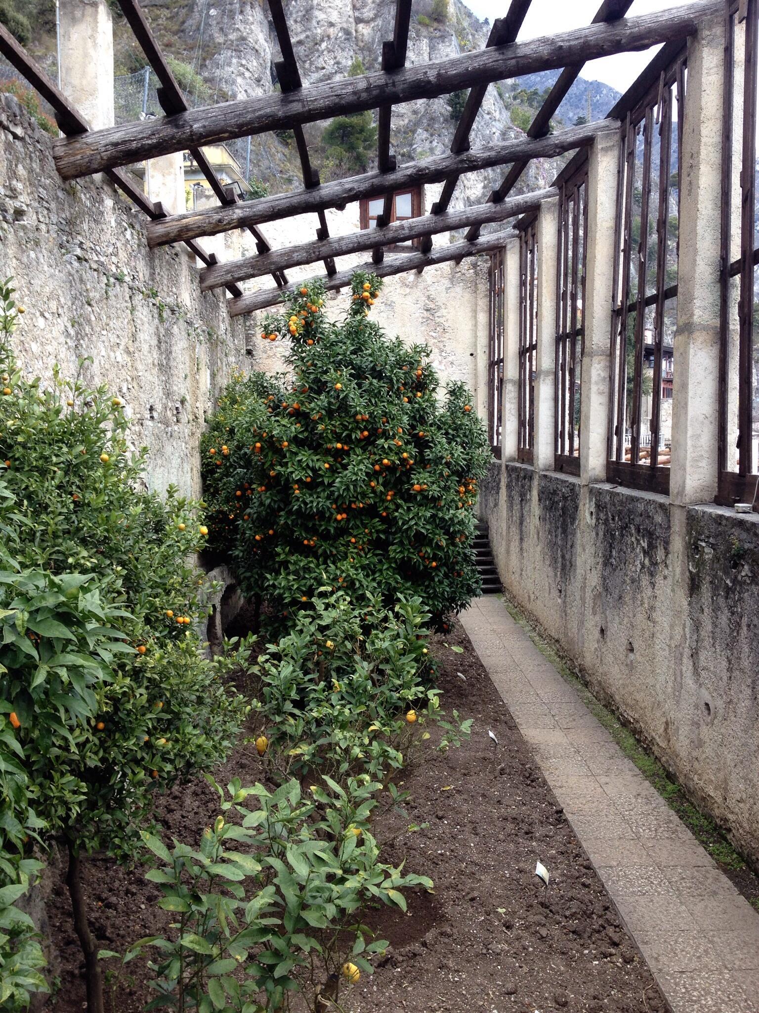 Zitronengewächshaus