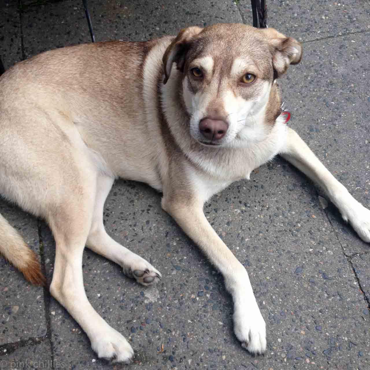 Franzi der Hund-5678