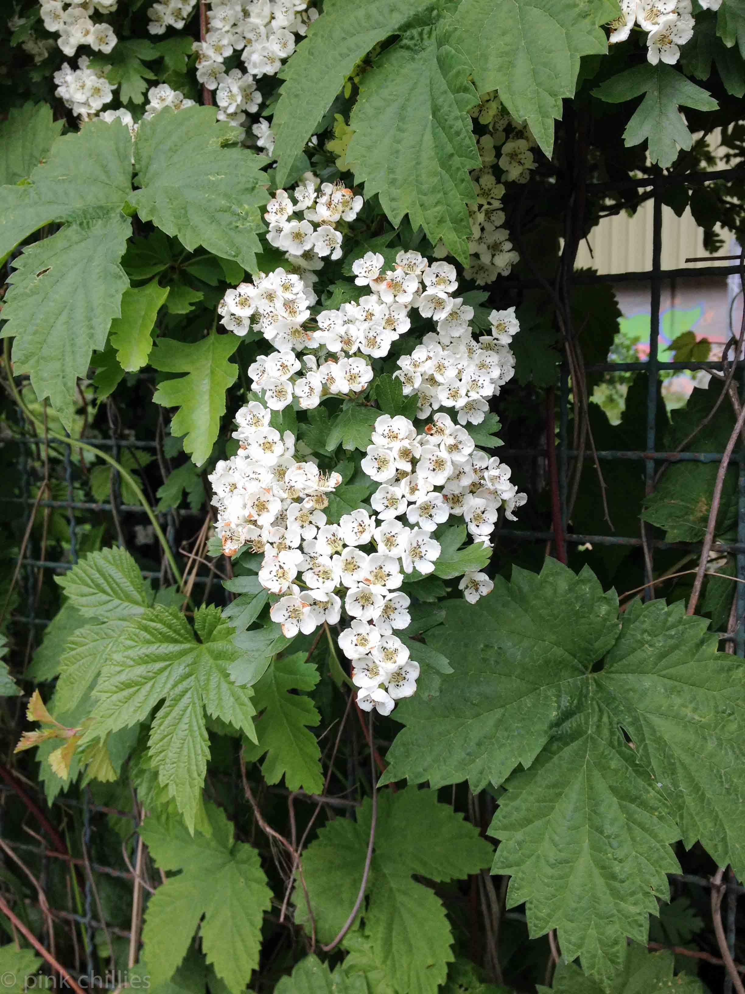 Pflanzen die riechen-5751