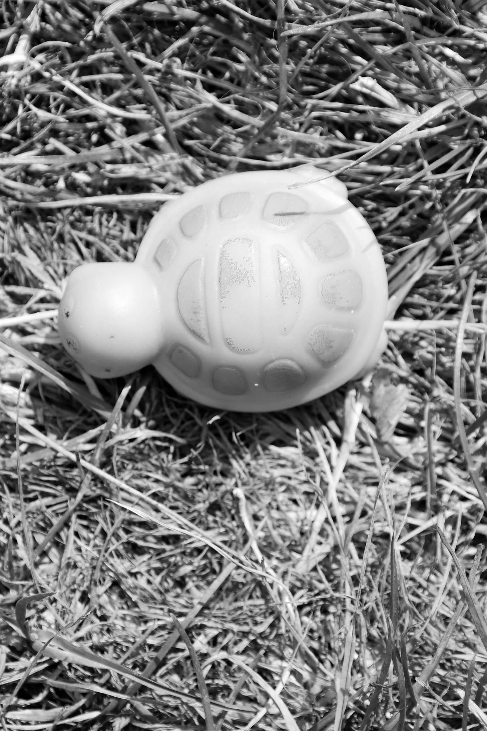 Spielzeugschildkröte