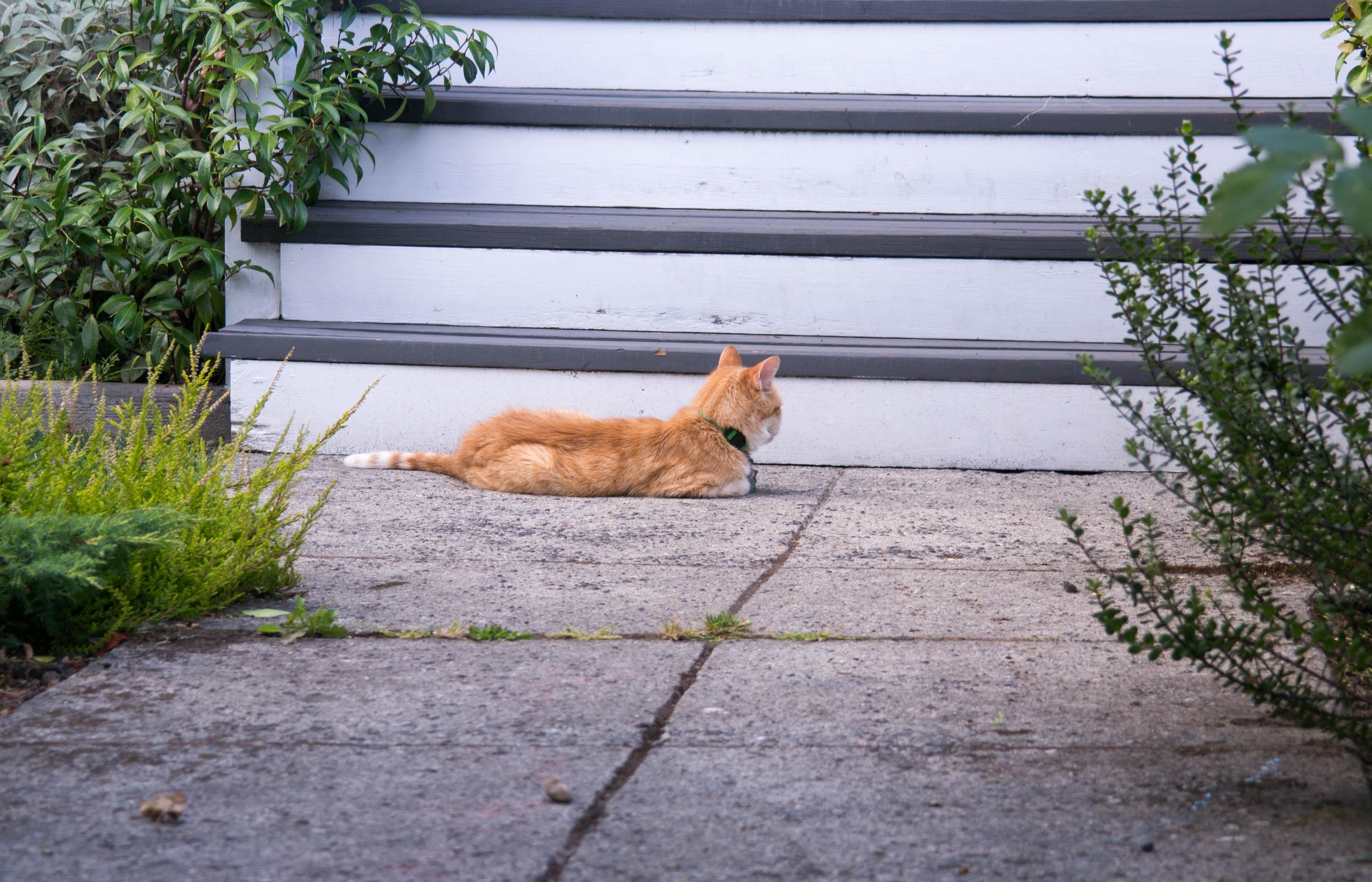 Seattle Katze