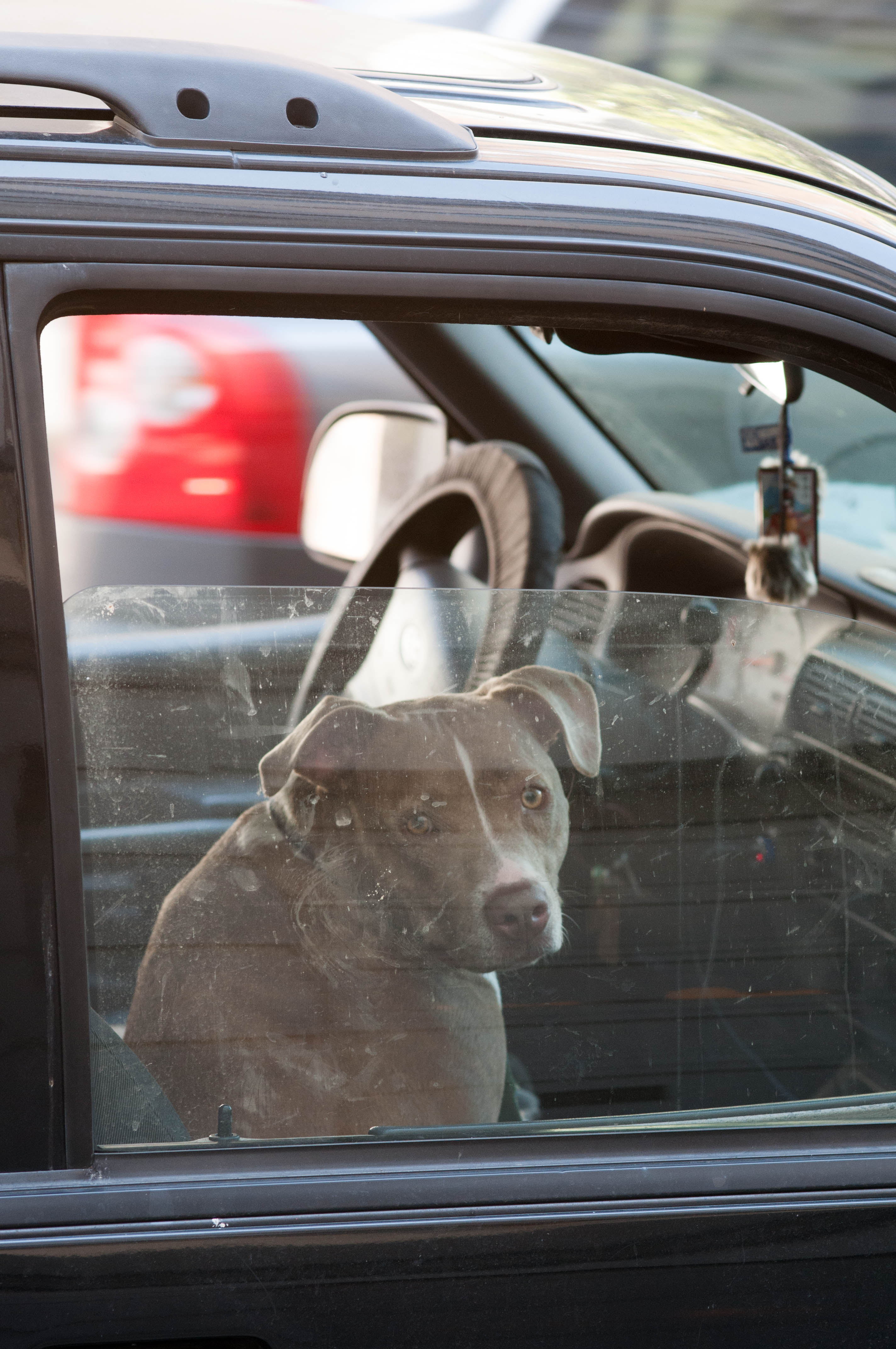 Hund im Auto SAN FRANCISCO