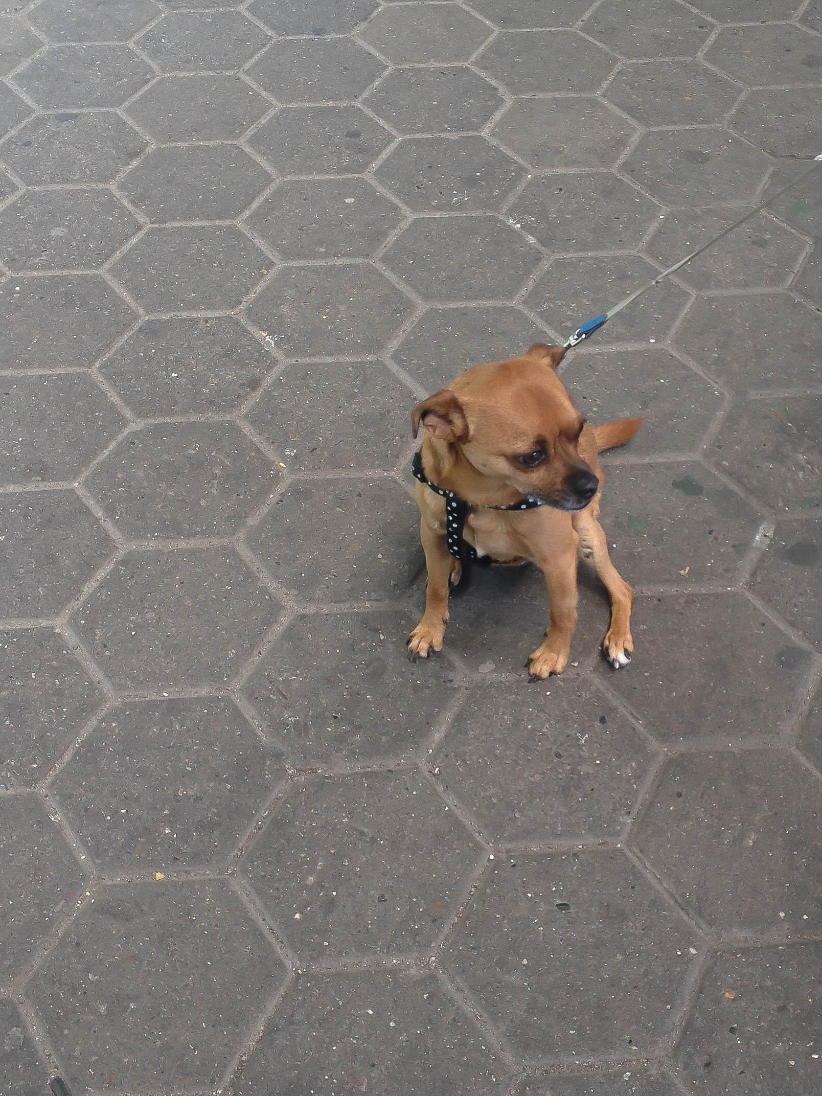 Mini Hund auf Bahnsteig