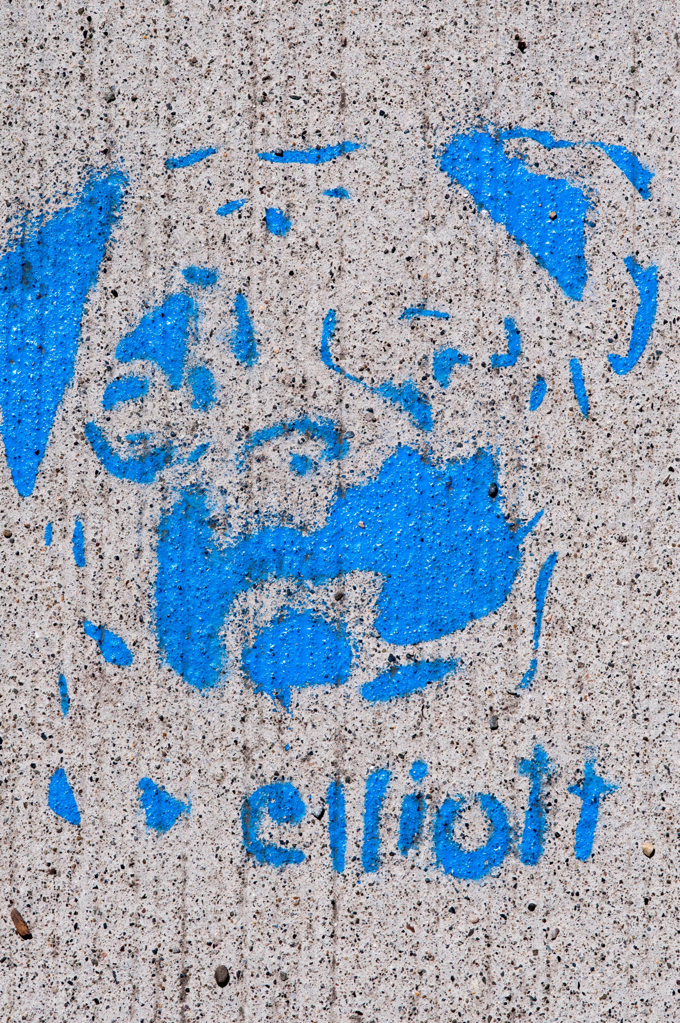 ellitott Seattle Dog
