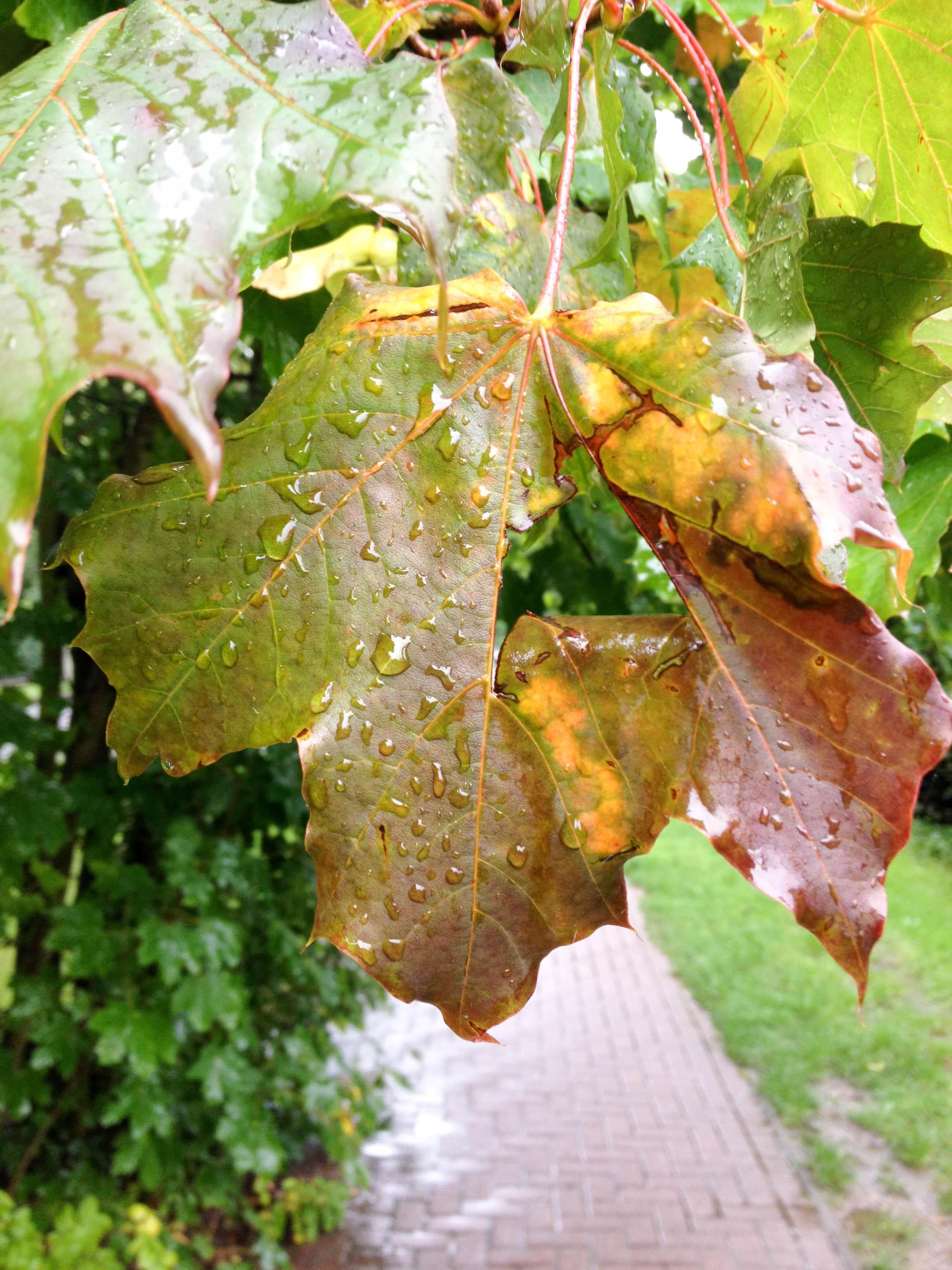 Blätter an Baum