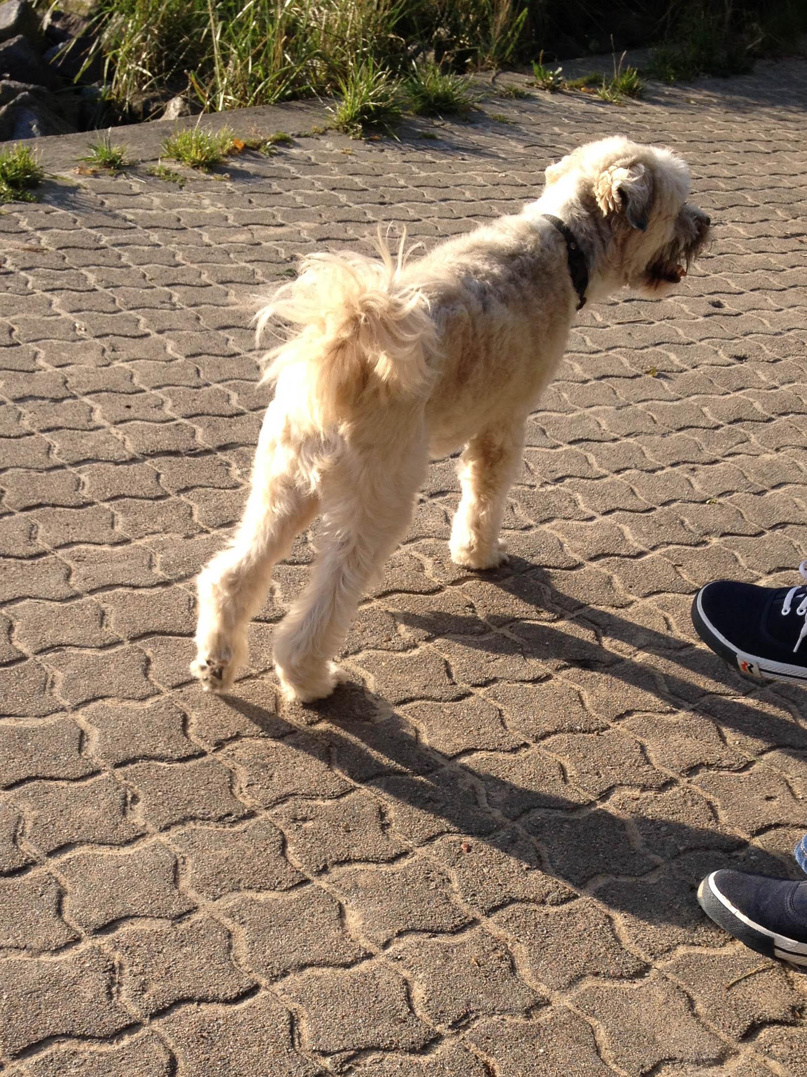 IMG_7104hund