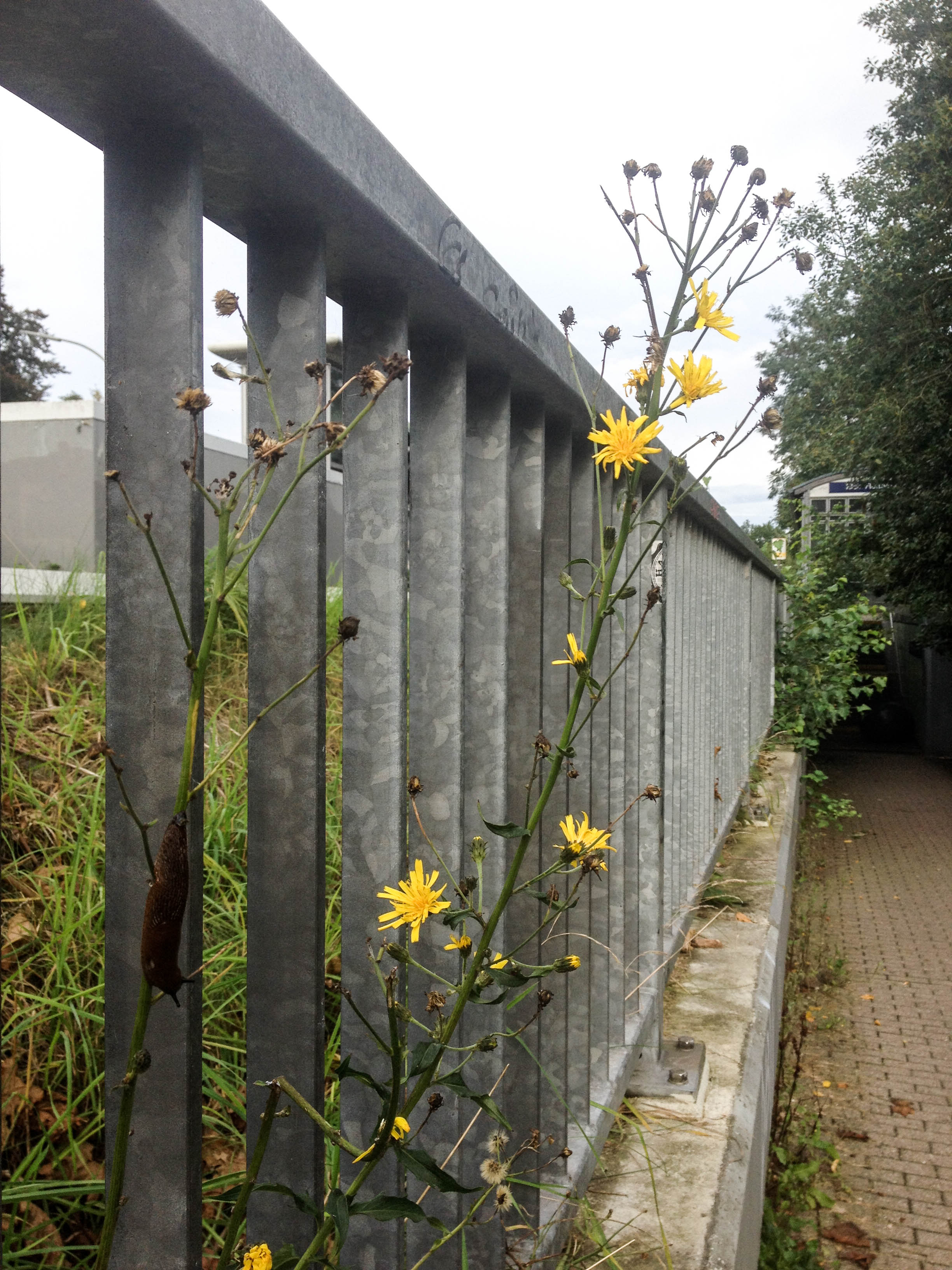 IMG_7185 Blume an Geländer