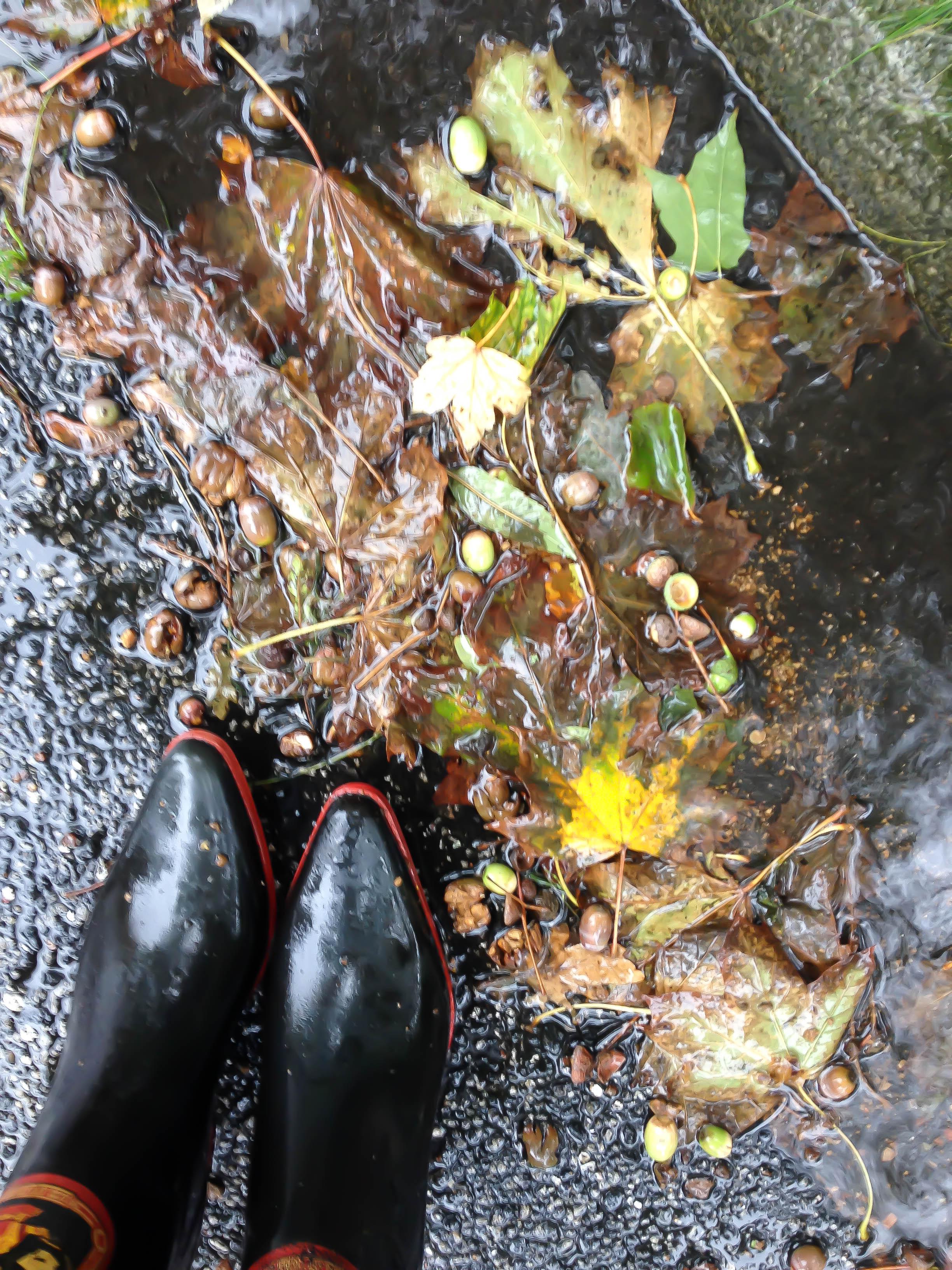 IMG_7190Cowboy Gummistiefel im Regen