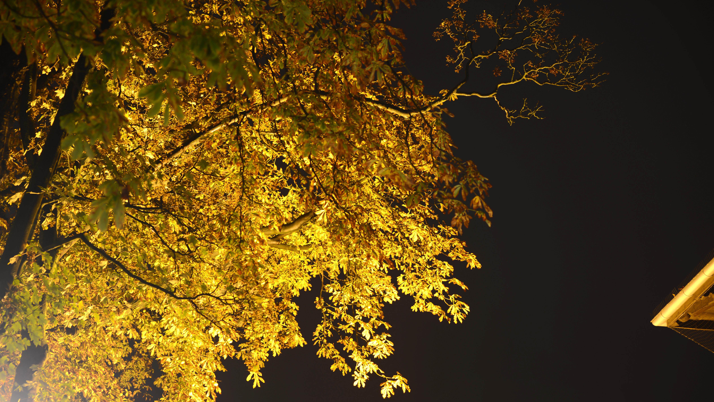 Lichterfest in der Waitzstraße
