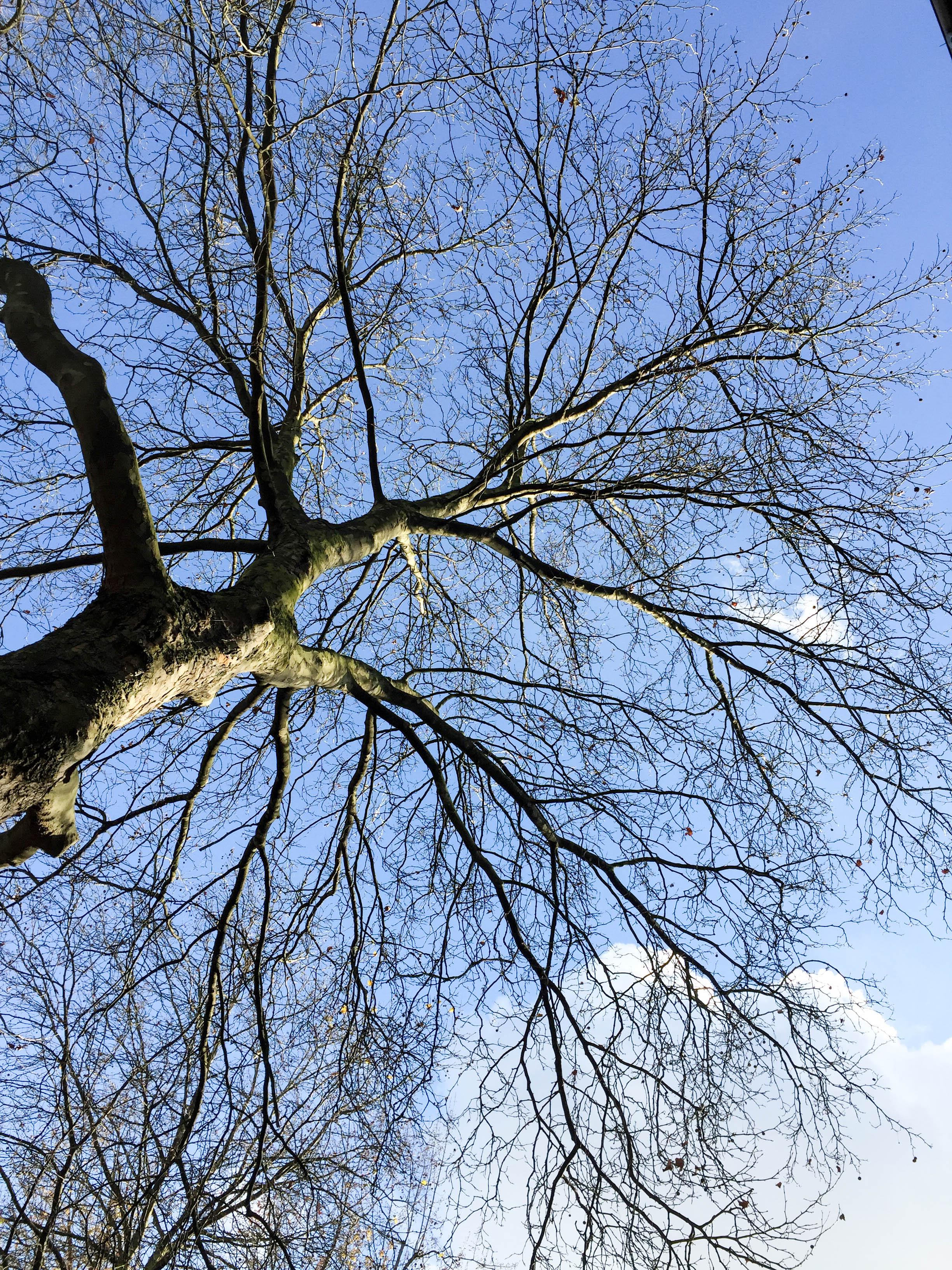 Himmel Baum-7963