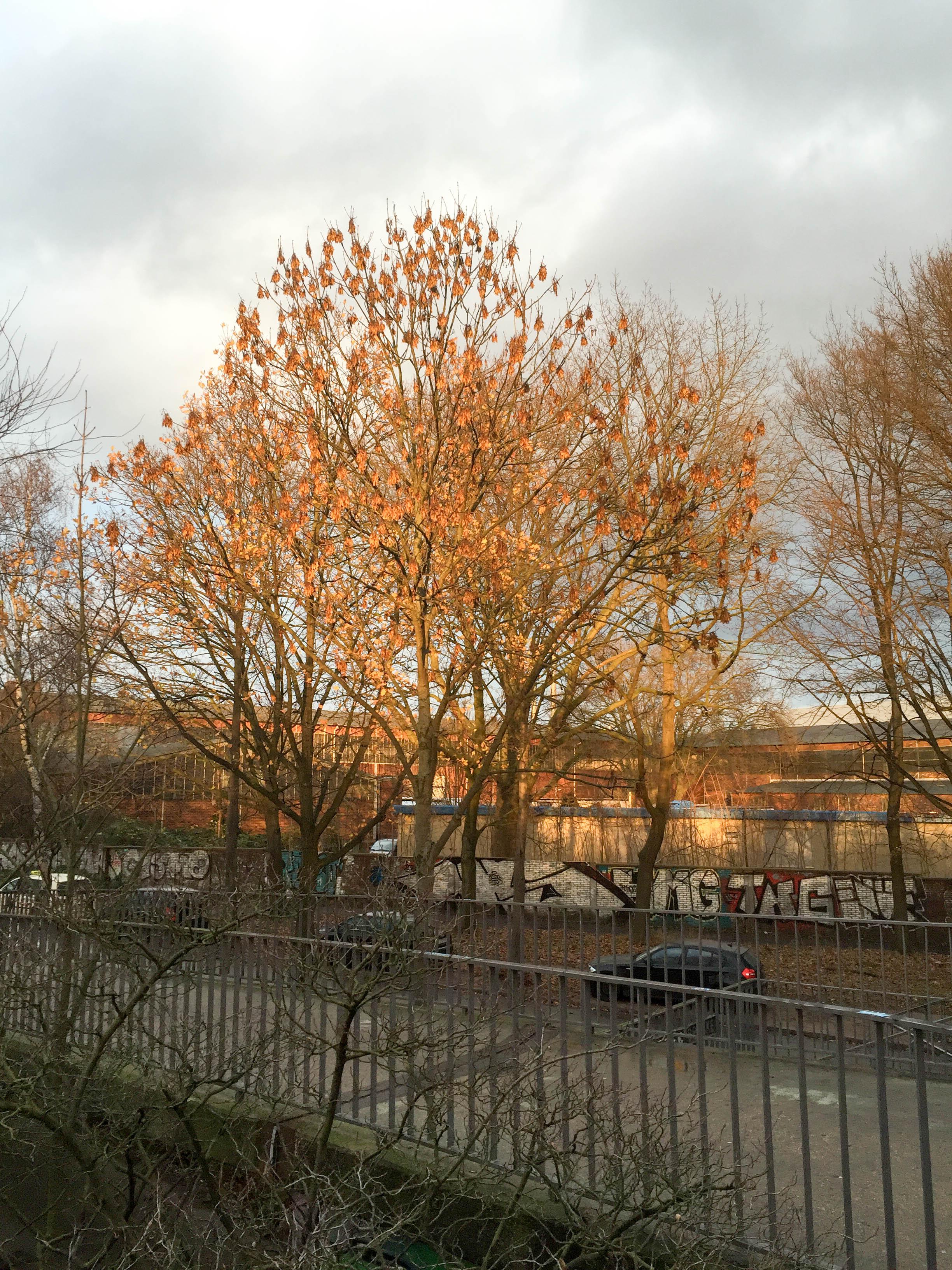 Baum Nachmittagslicht