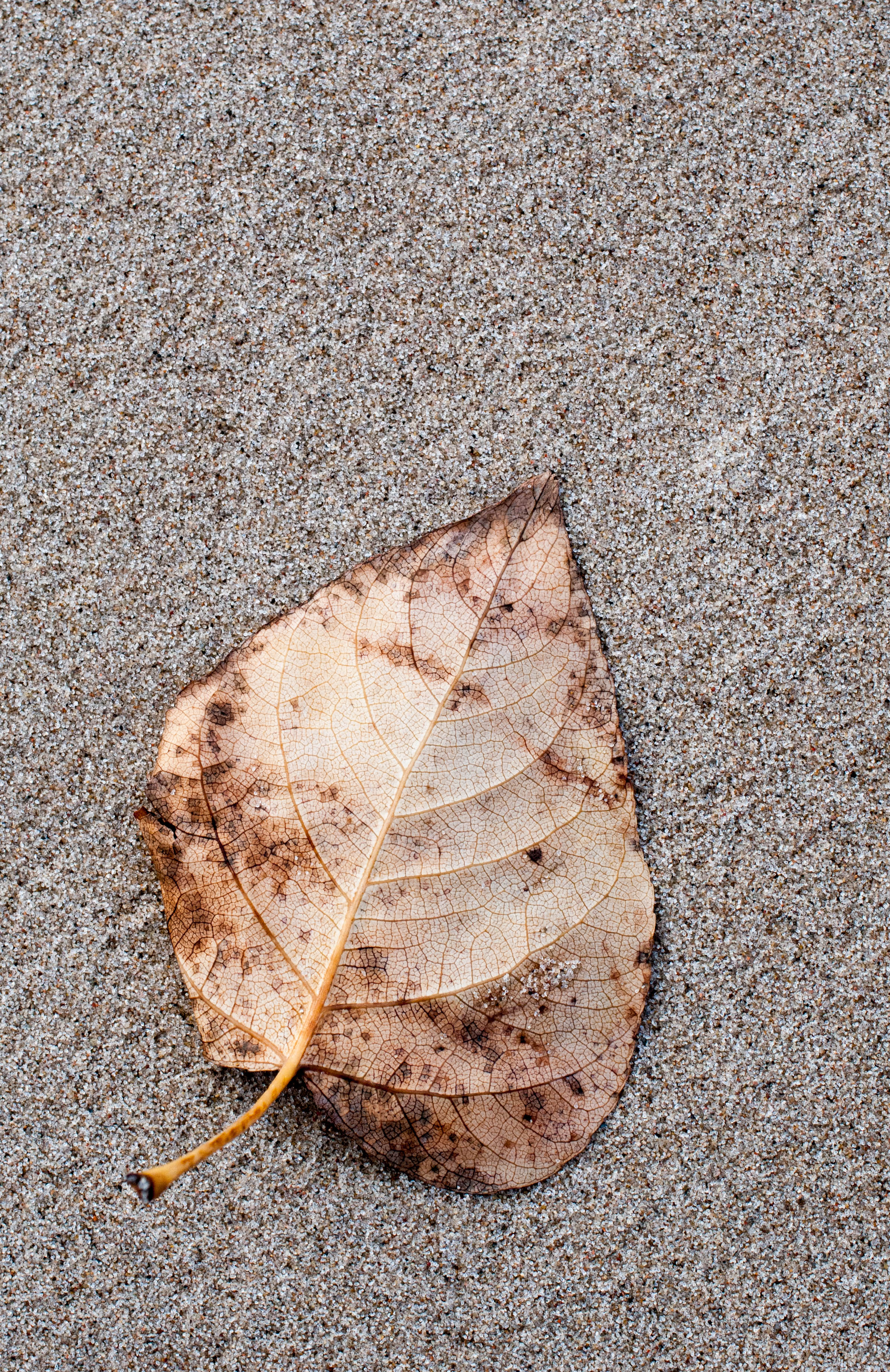 Blatt im Sand
