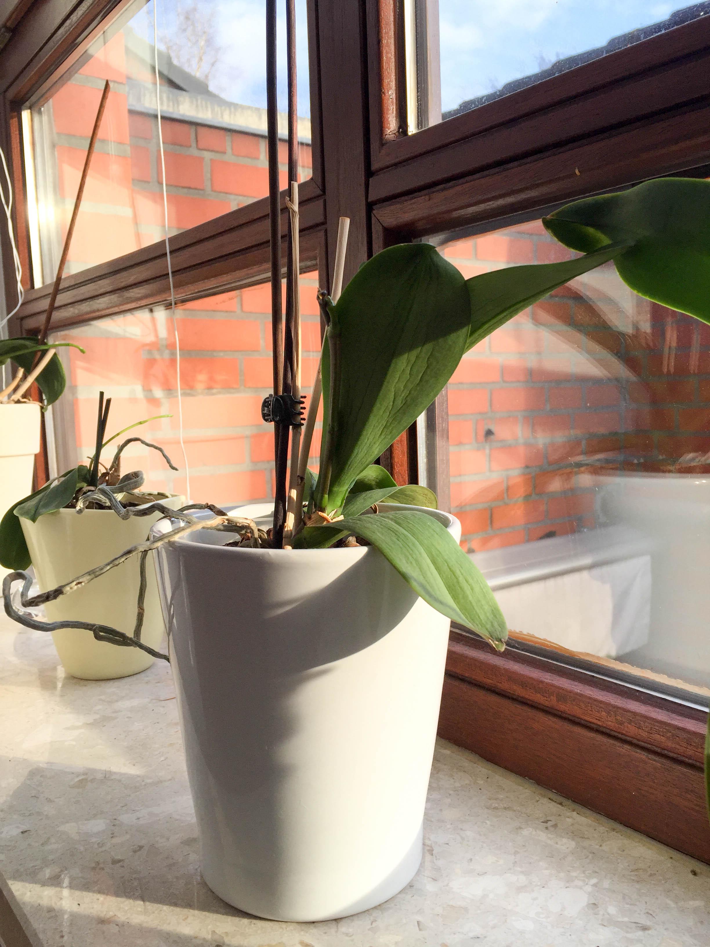 Orchideen-8783