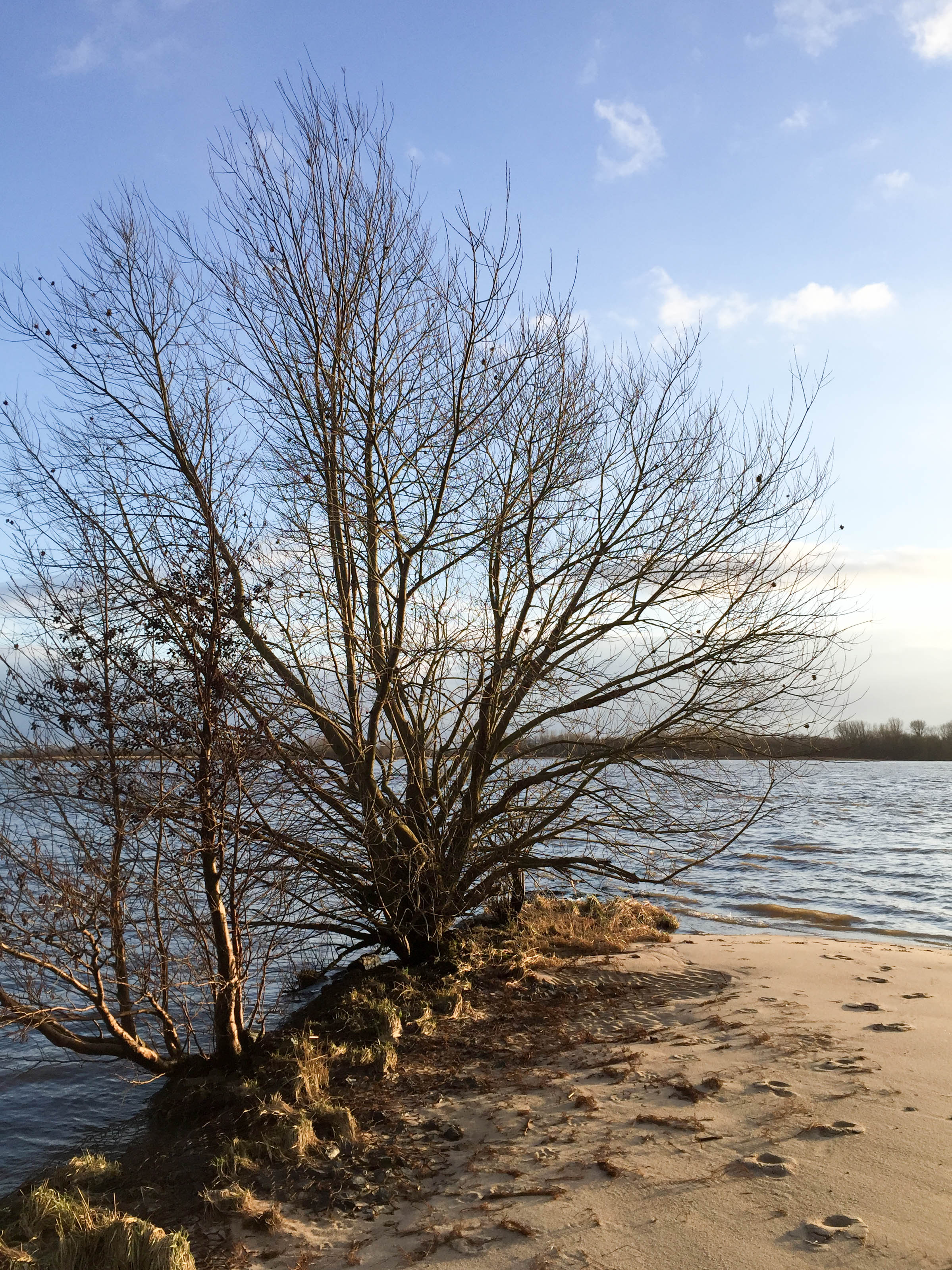 Baum an Elbe