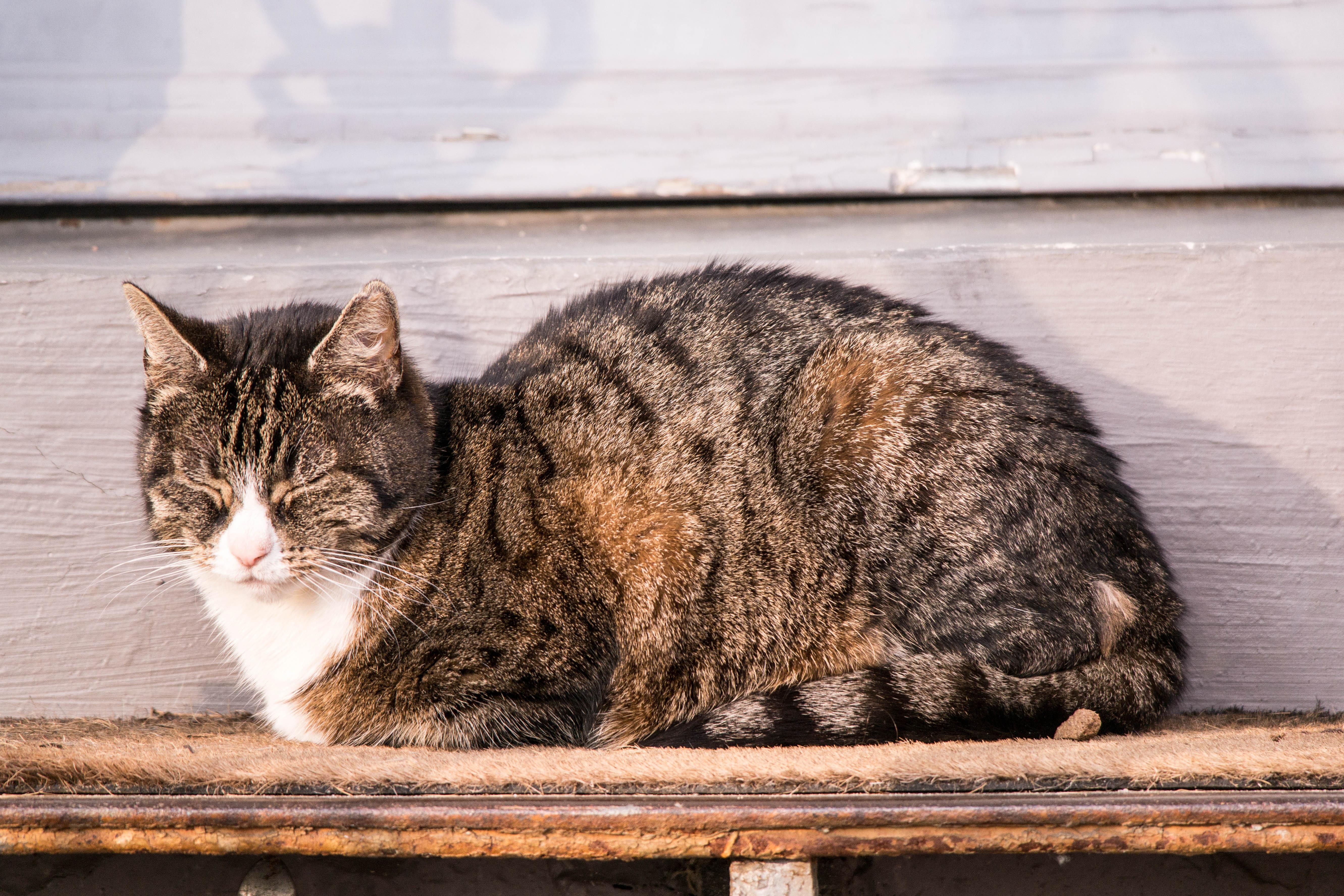 schlafende Katze 12von12-0066
