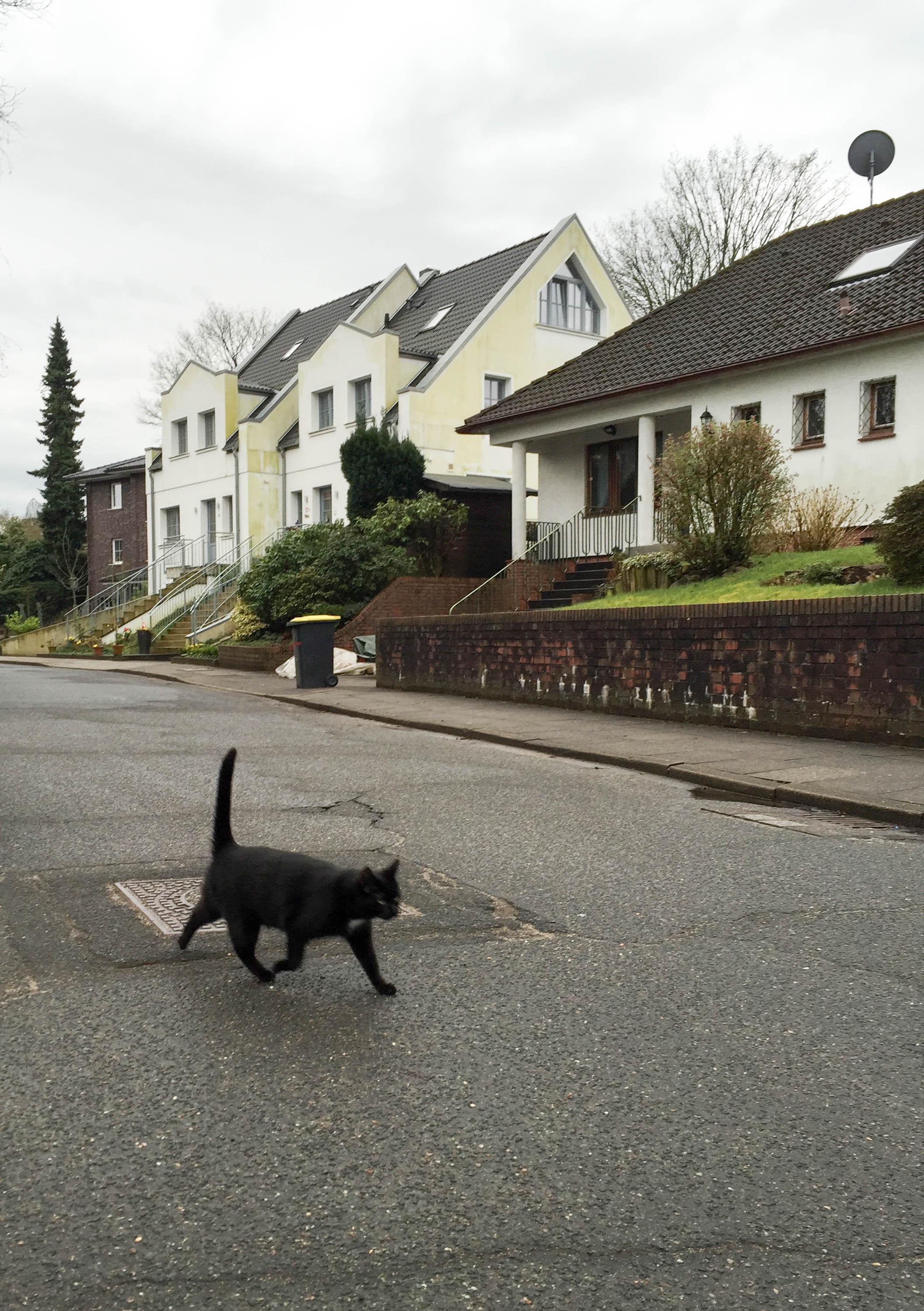 Katze überquerrt Straße-9460