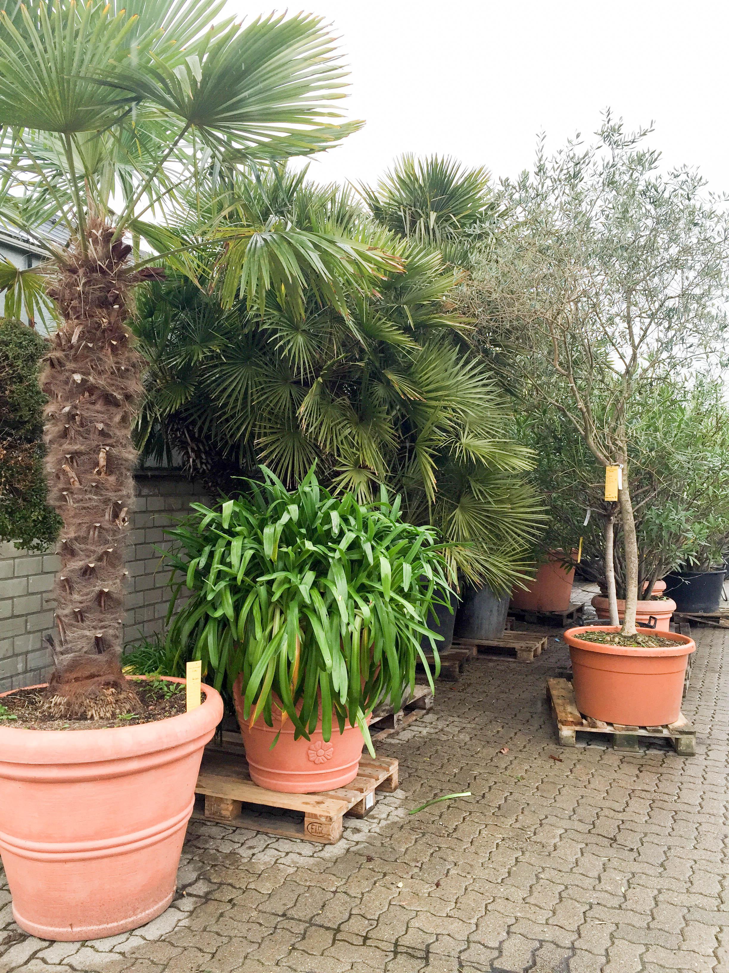 Und dann waren da die Palmen, die einfach nicht ins Auto passen wollten.