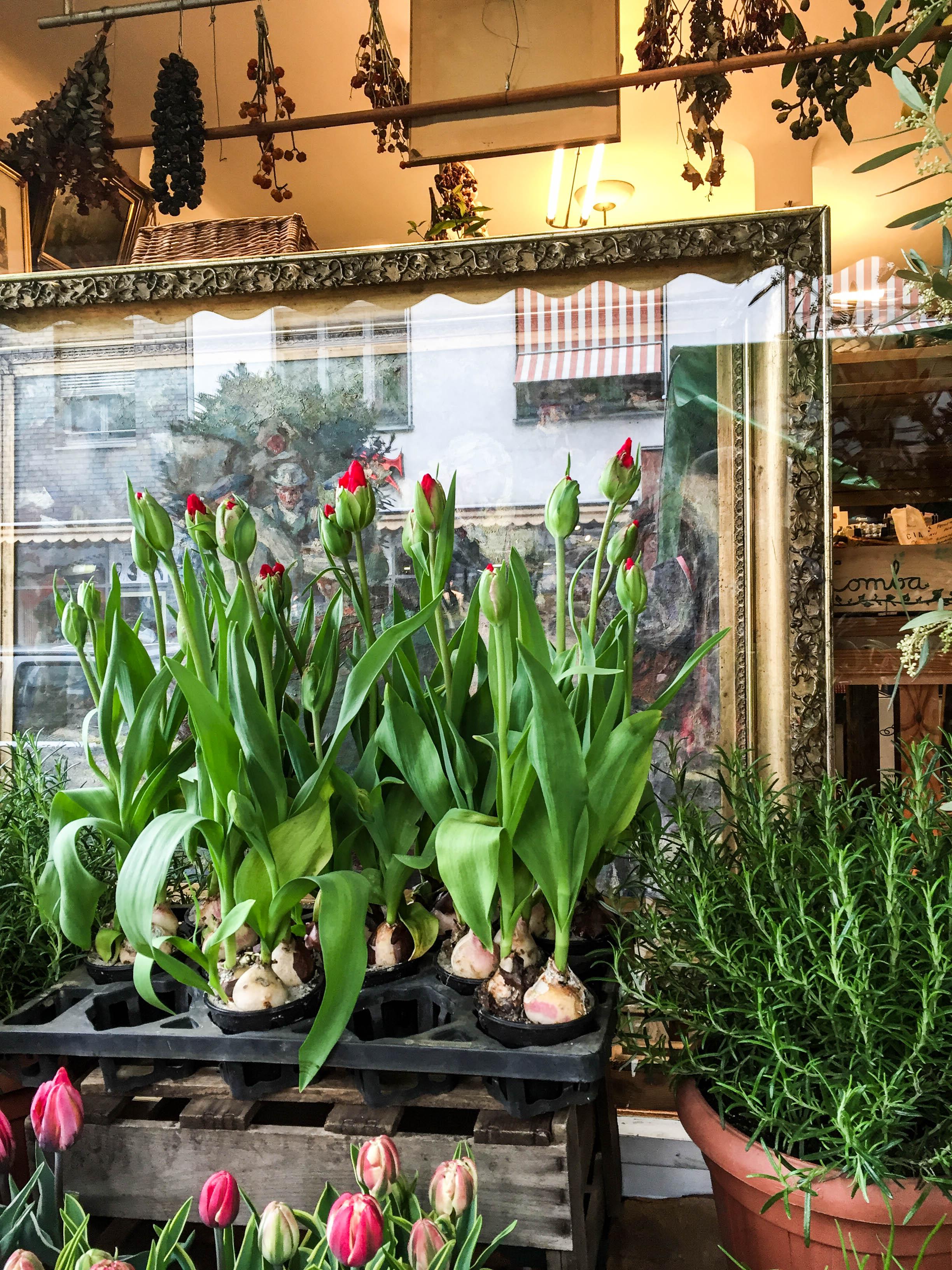 Tulpen und Gemälde
