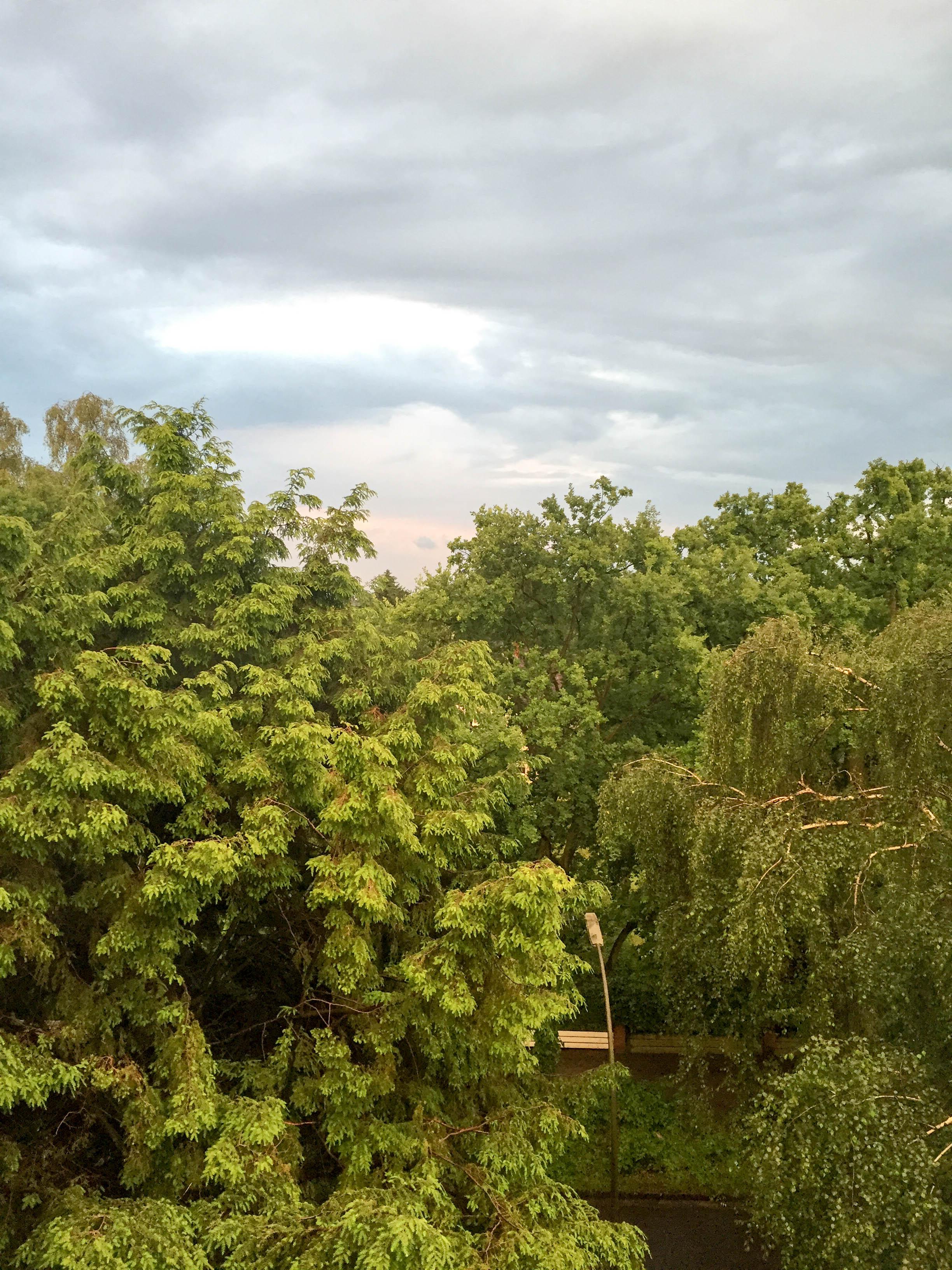 Blick ins Grüne