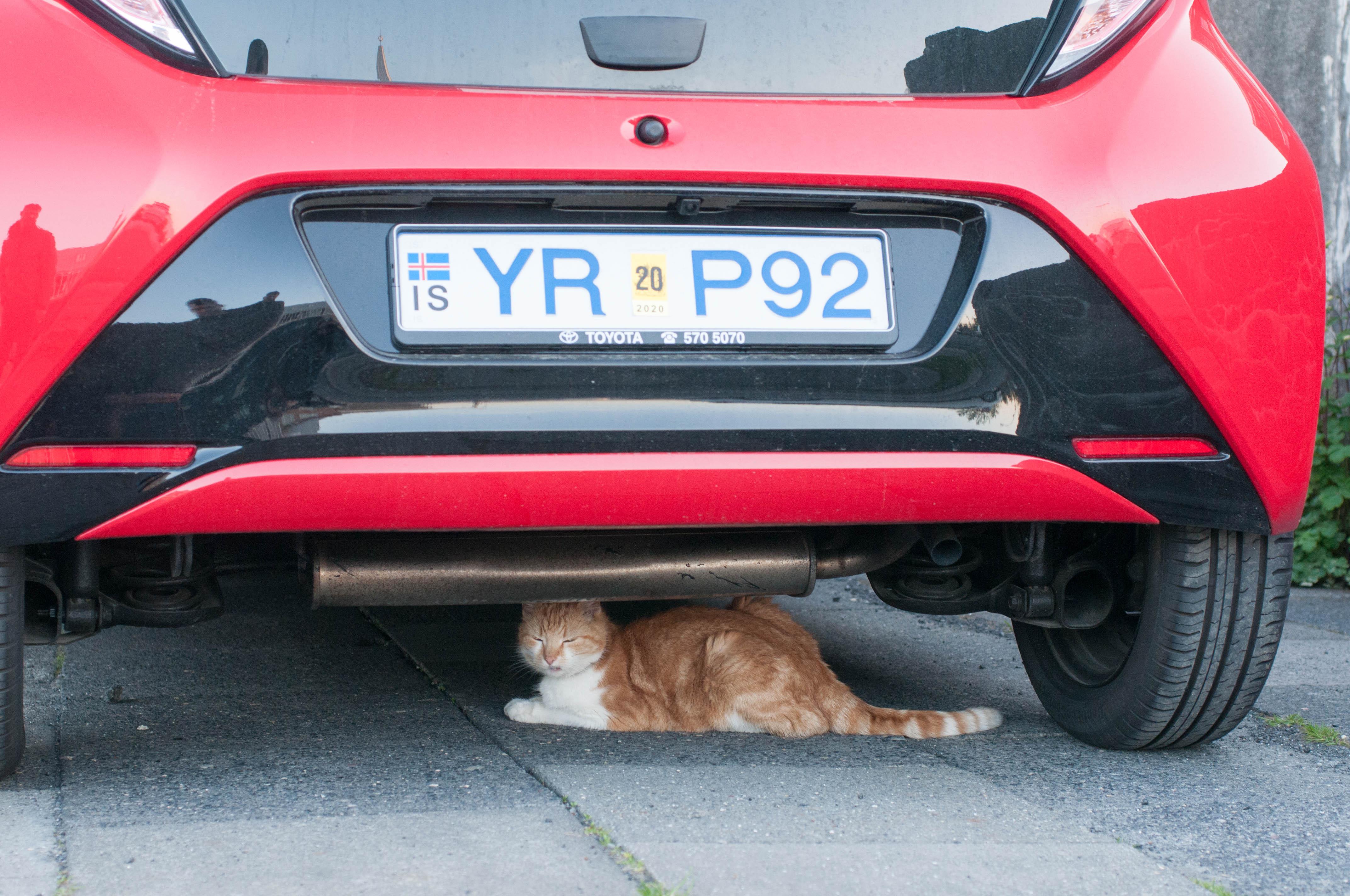 Katze unter Auto