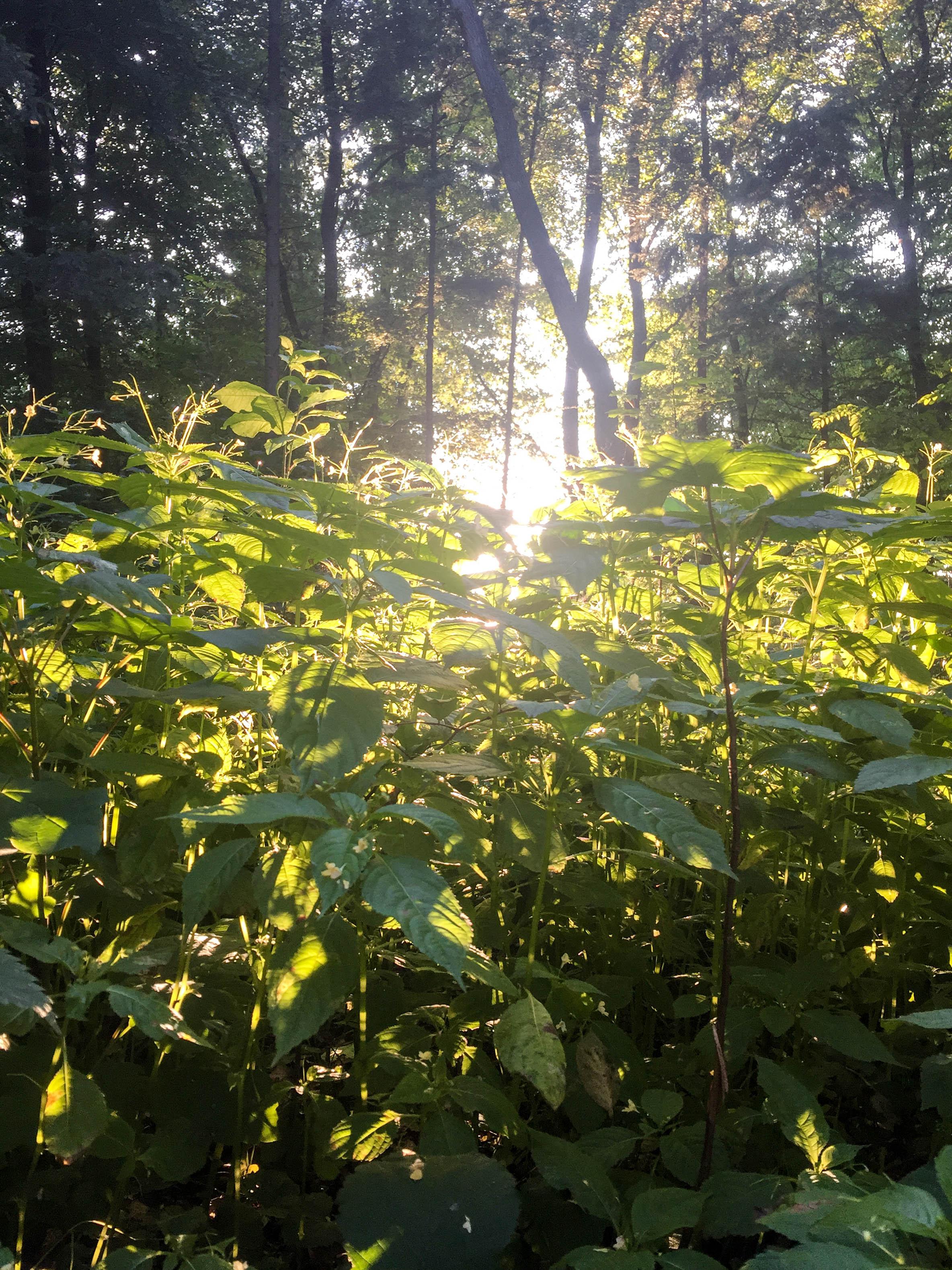 Wald Sonnenlicht abends