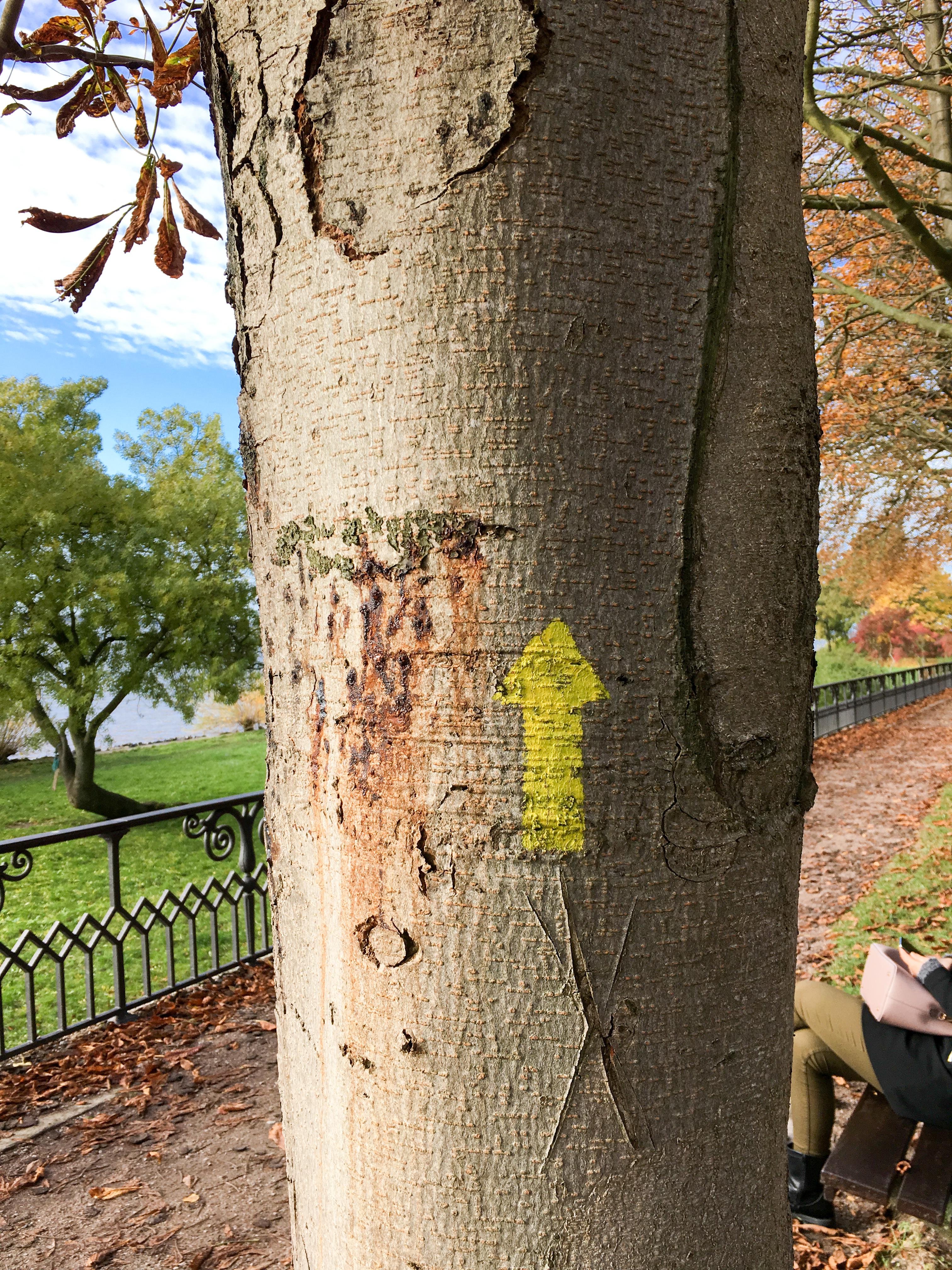 Pfeil an Baum