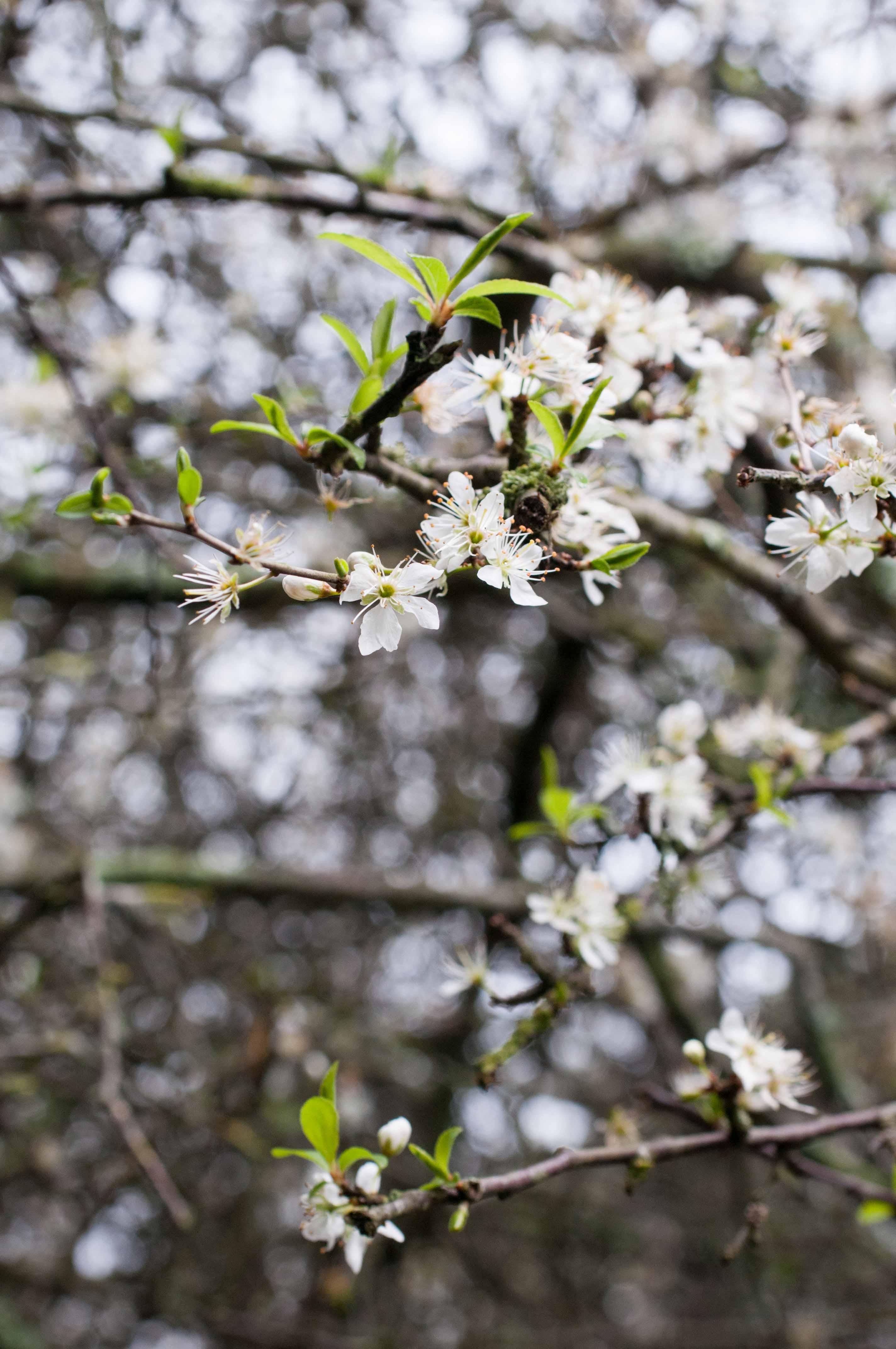 Blüten Baum