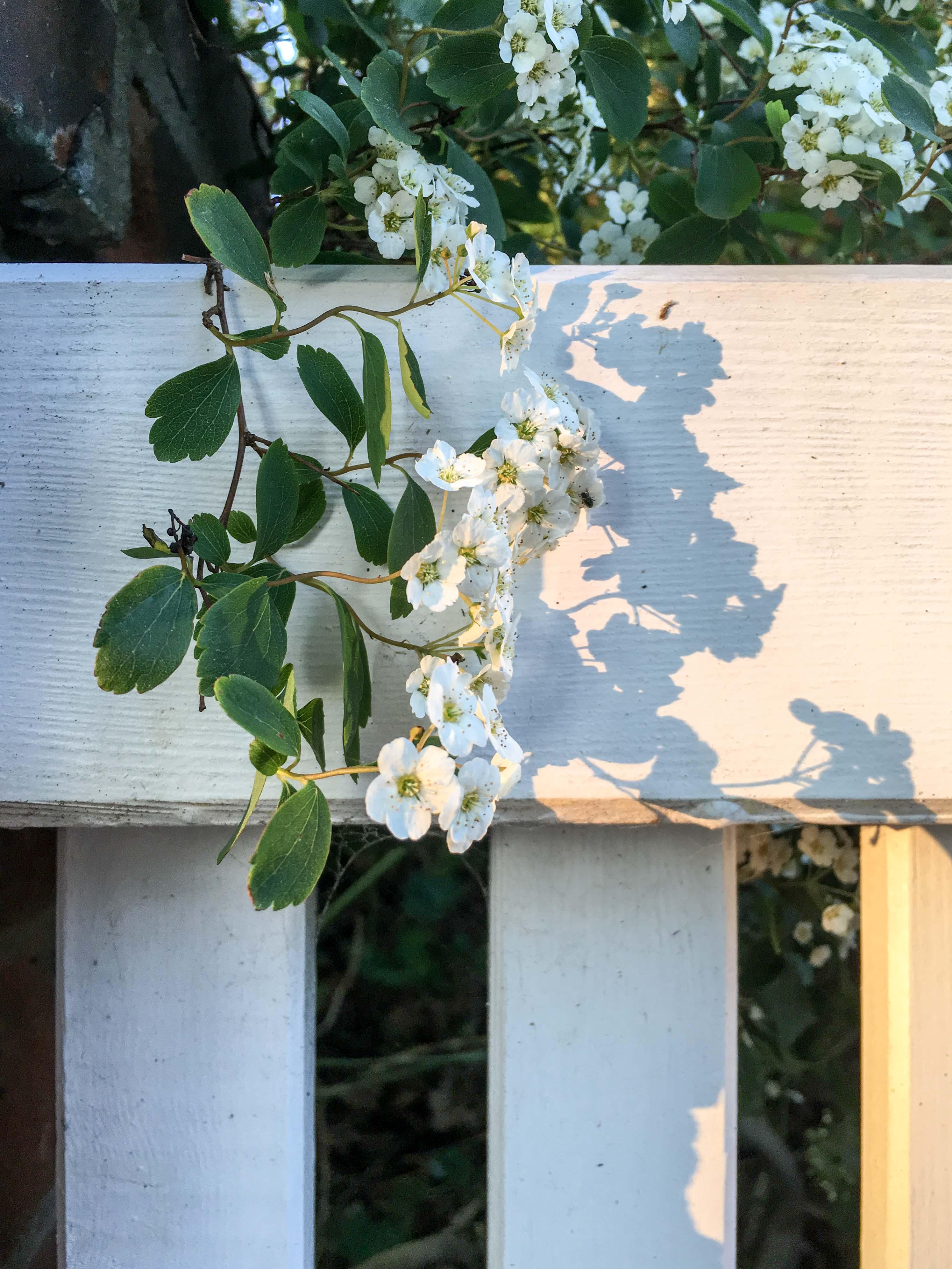Blumen weiß und grün