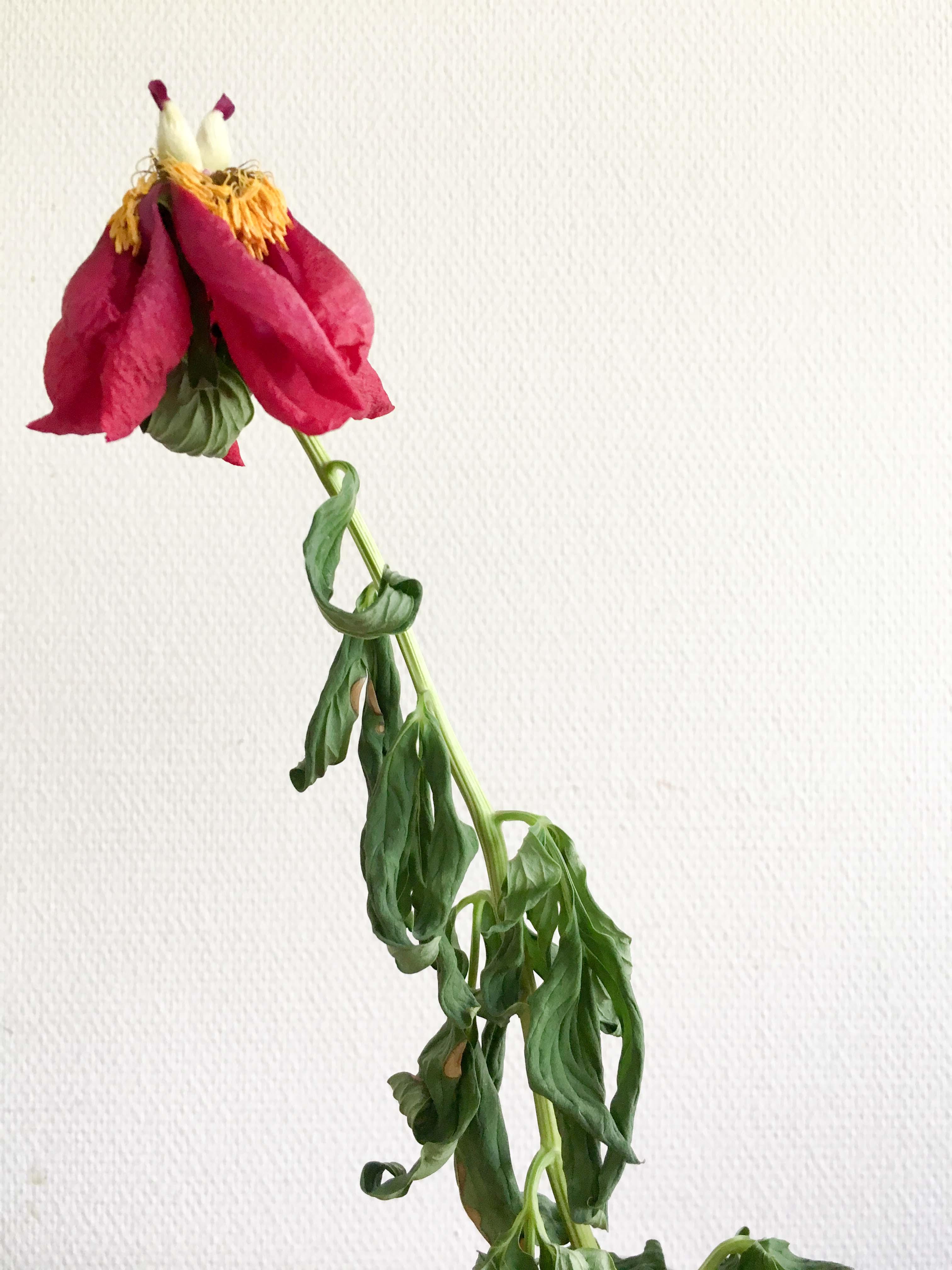 verwelkte Kunstblume