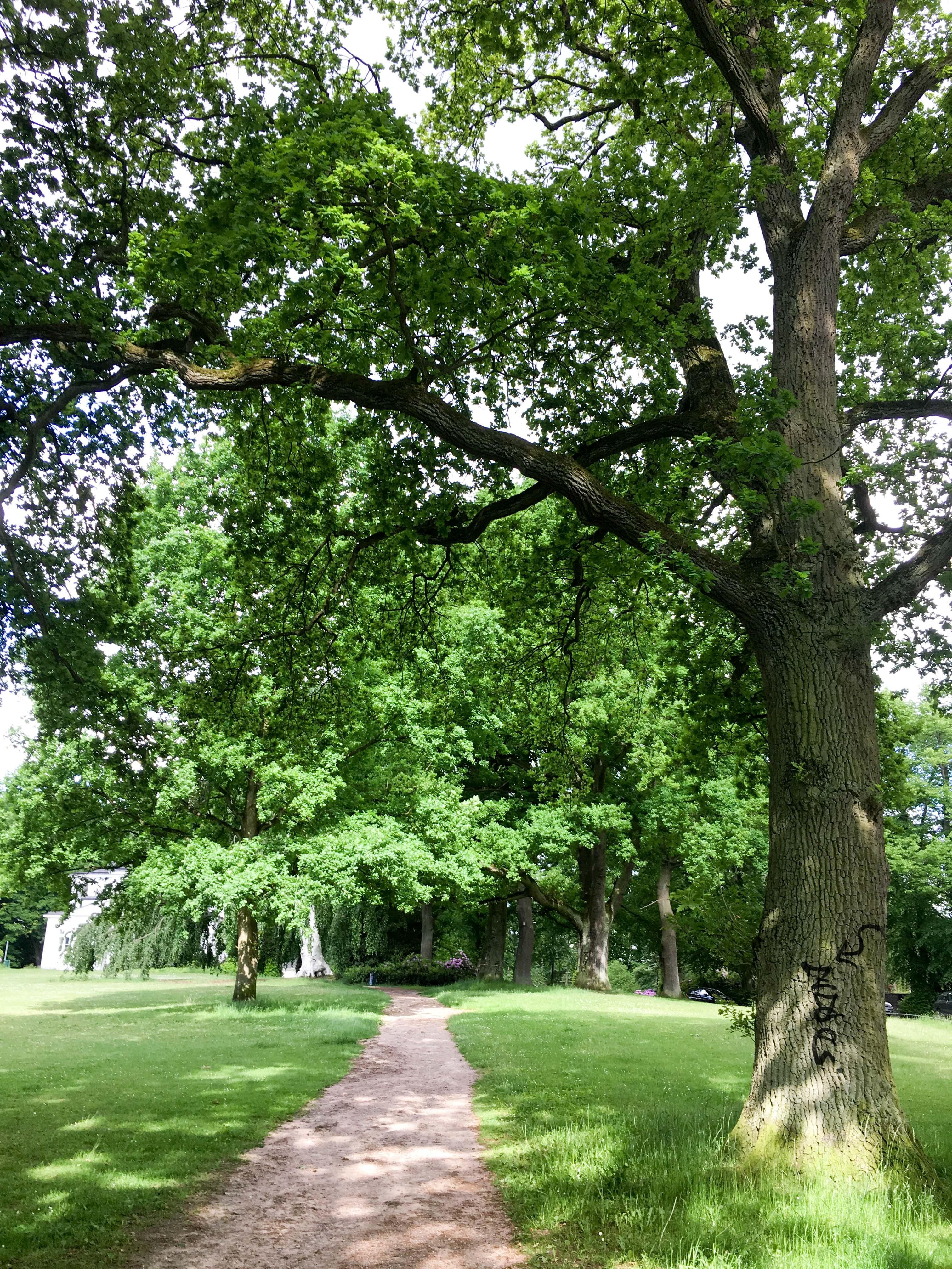 beschmierter Baum