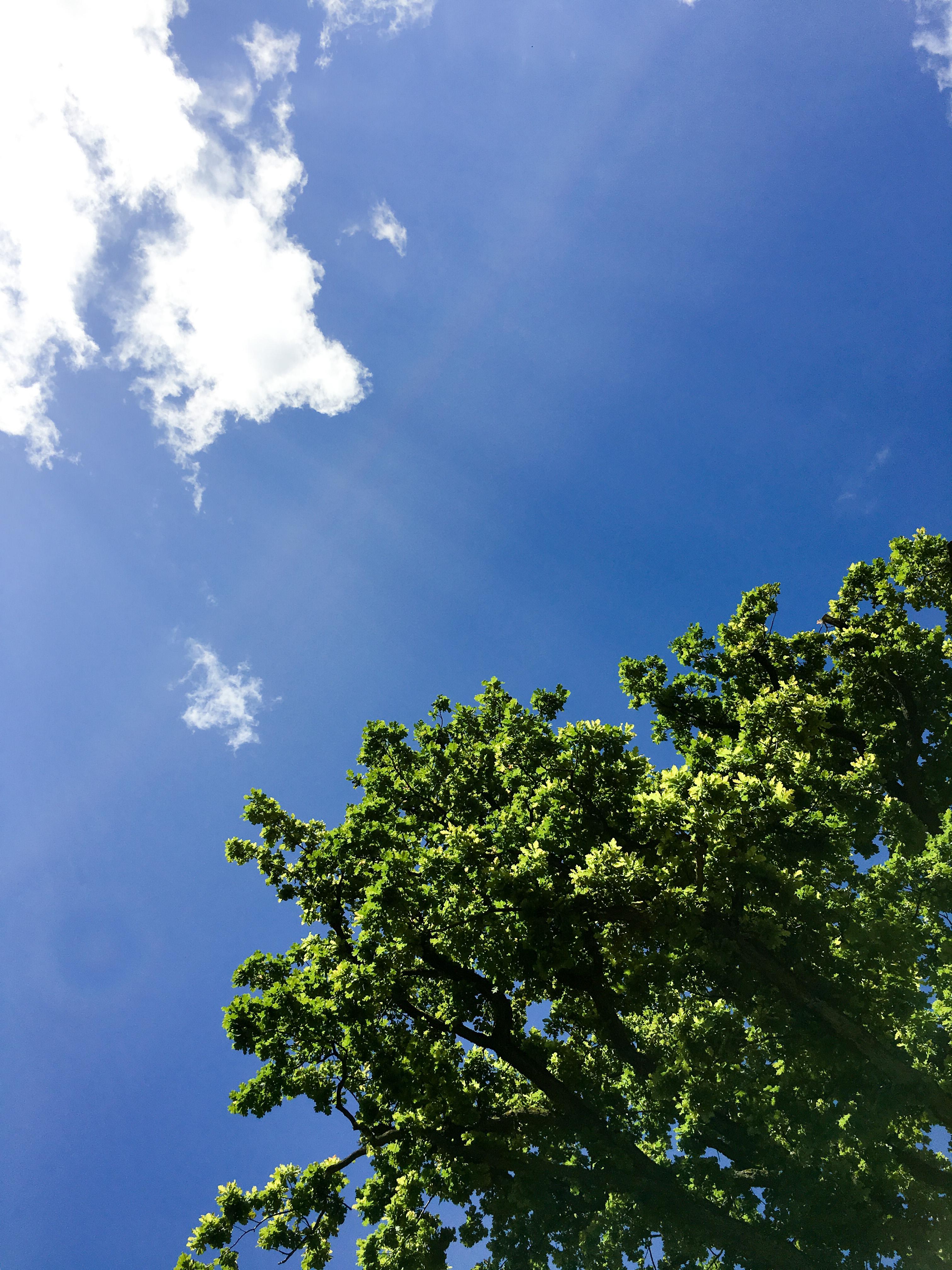 Eiche blauer Himmel