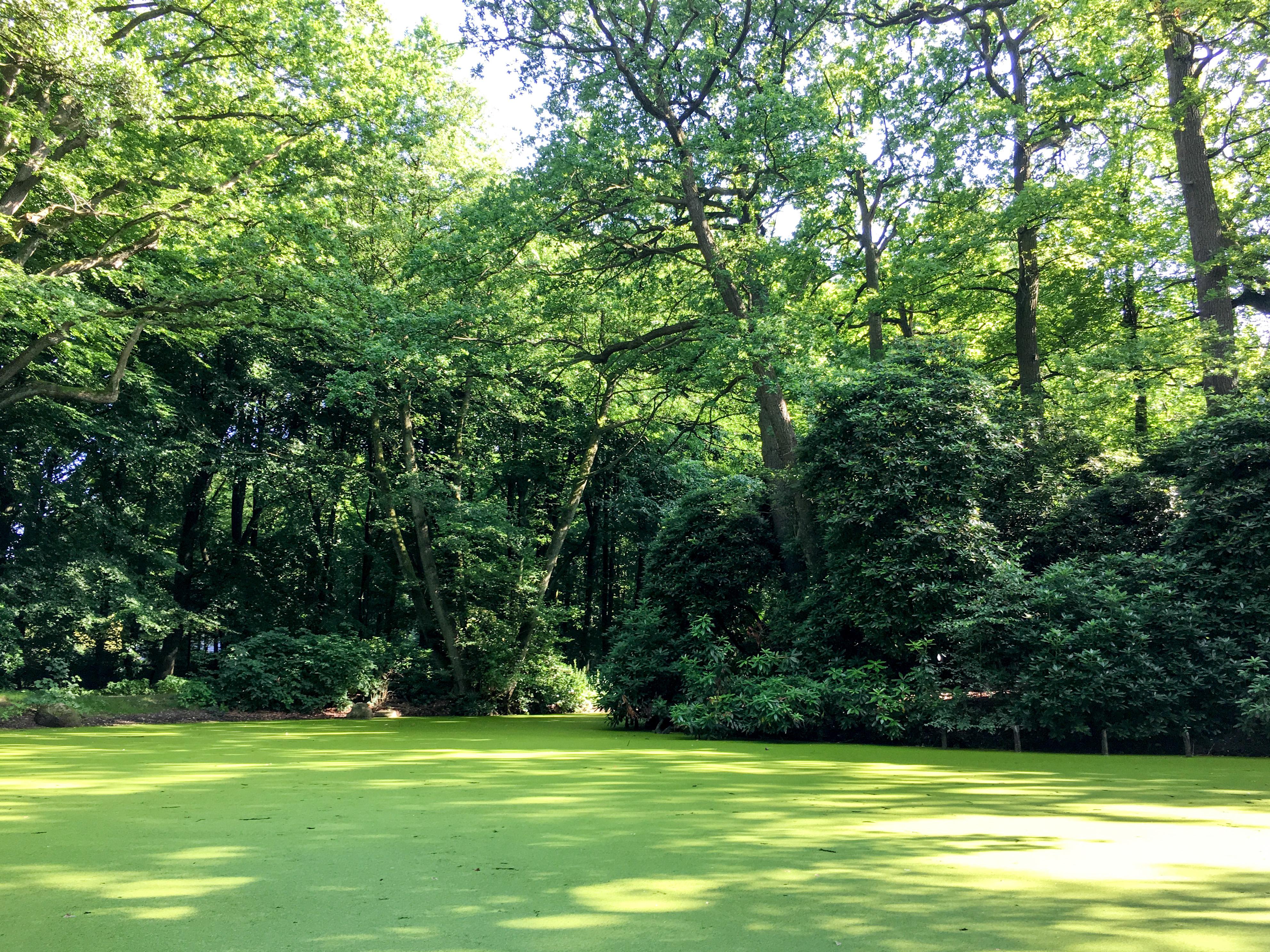 Teich im Hirschpark